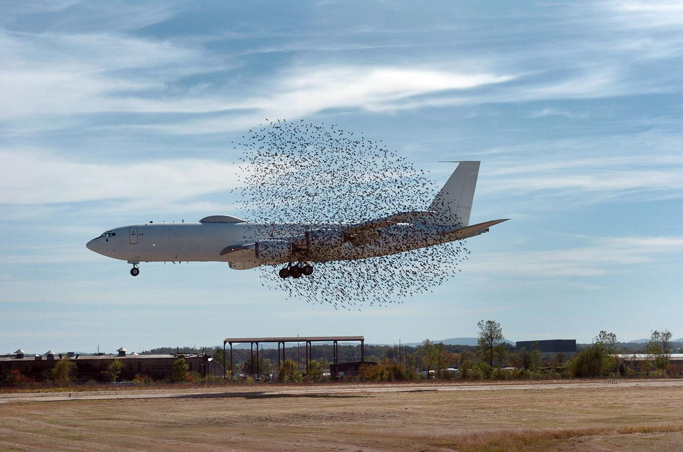 The Federal Aviation Administration reports that more than 108,000 wildlife strikes to airplanes occurred in the last 19 years, with an average of 20 wildlife strikes reported daily from 2004-2008. (Photo by Caters News Agency)