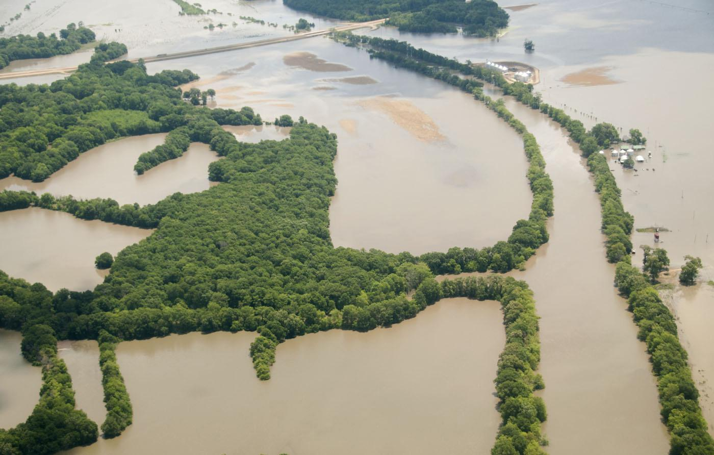 The overflowing Mississippi River and its tributaries are threatening the Delta's trees, but many can survive for weeks in flood waters as long as their crowns remain above water and their roots do not become too exposed. (Photo by Scott Corey)