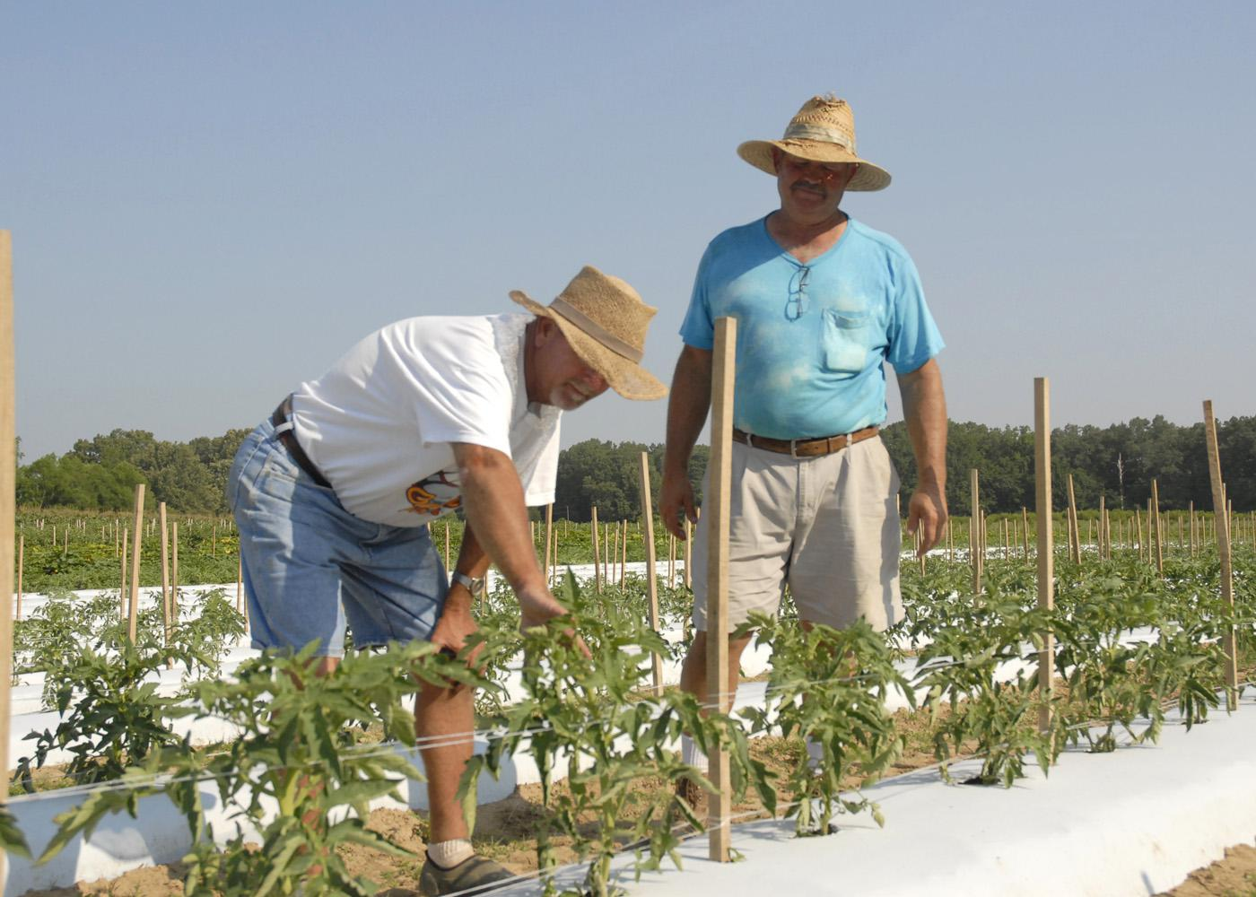 Doil Moore, left, gets a closer look at young tomatoes on Prospect Produce Farm in the Sonora Community, south of Houston. Moore and his business partner, James Earnest, have been selling locally grown fruits and vegetables since 2009.