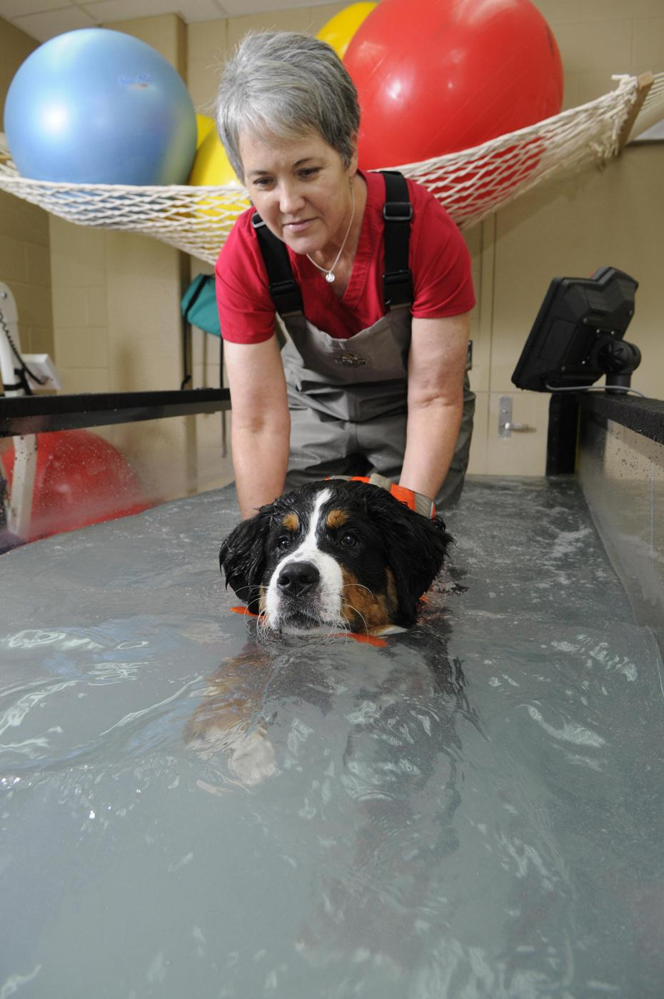 Ruby Lynn Carter, a certified physical rehabilitationist, works at Mississippi State University's College of Veterinary Medicine where she helps injured animals, such as Leia, restore muscle strength and mobility and maintain their cardiovascular health. (Photo by Tom Thompson)