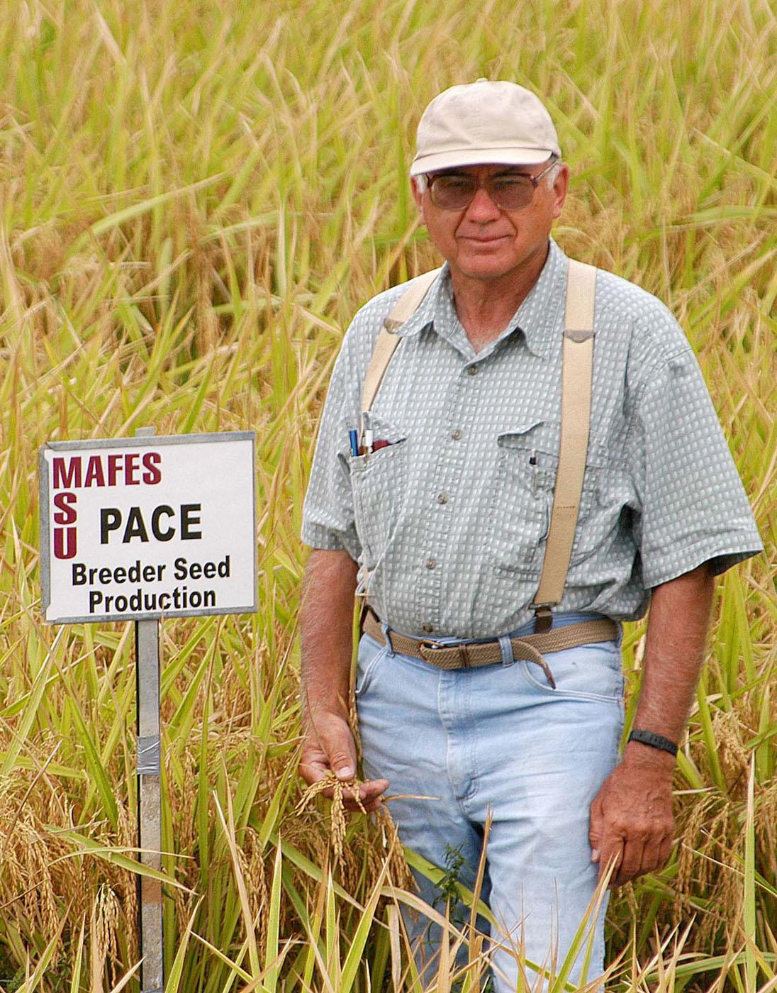 Mississippi State University Rice breeder Dwight Kanter stands in a field of Pace variety rice he developed at the Delta Research and Extension Center in Stoneville. (Photograph by DREC Communication/Rebekah Ray)