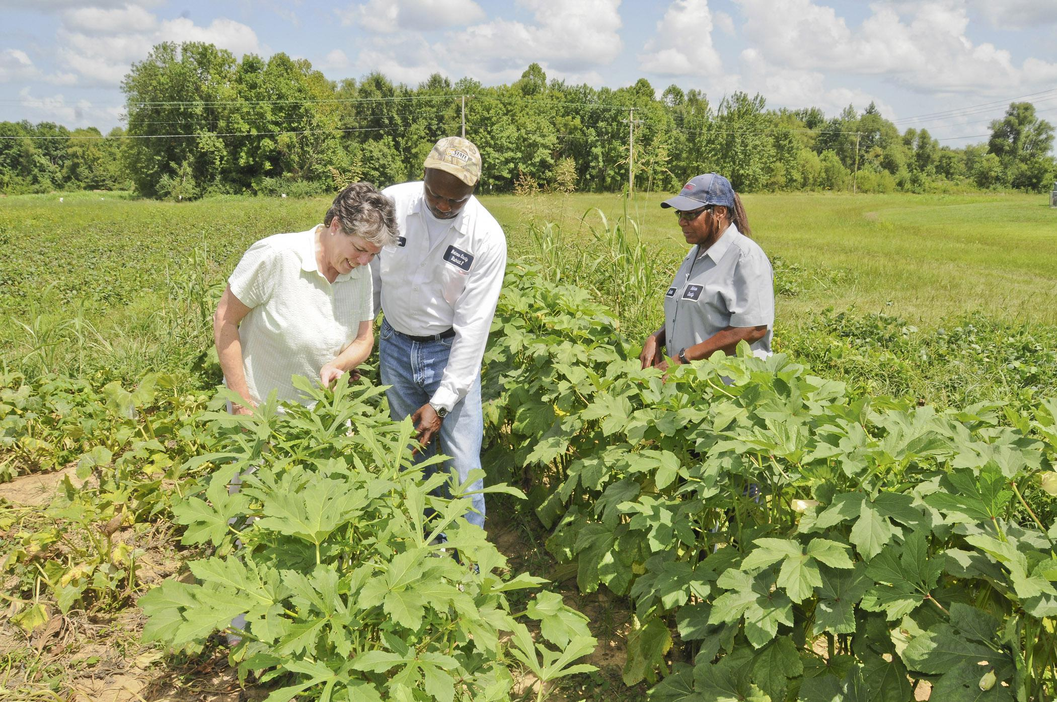 From left, Holmes County Extension Director Betsy Padgett, Holmes County District 2 Supervisor James Young, and Holmes County Supervisor District 2 staff member Linda Lowery inspect okra in the community garden in Durant. (Photo by MSU Ag Communications/Scott Corey)