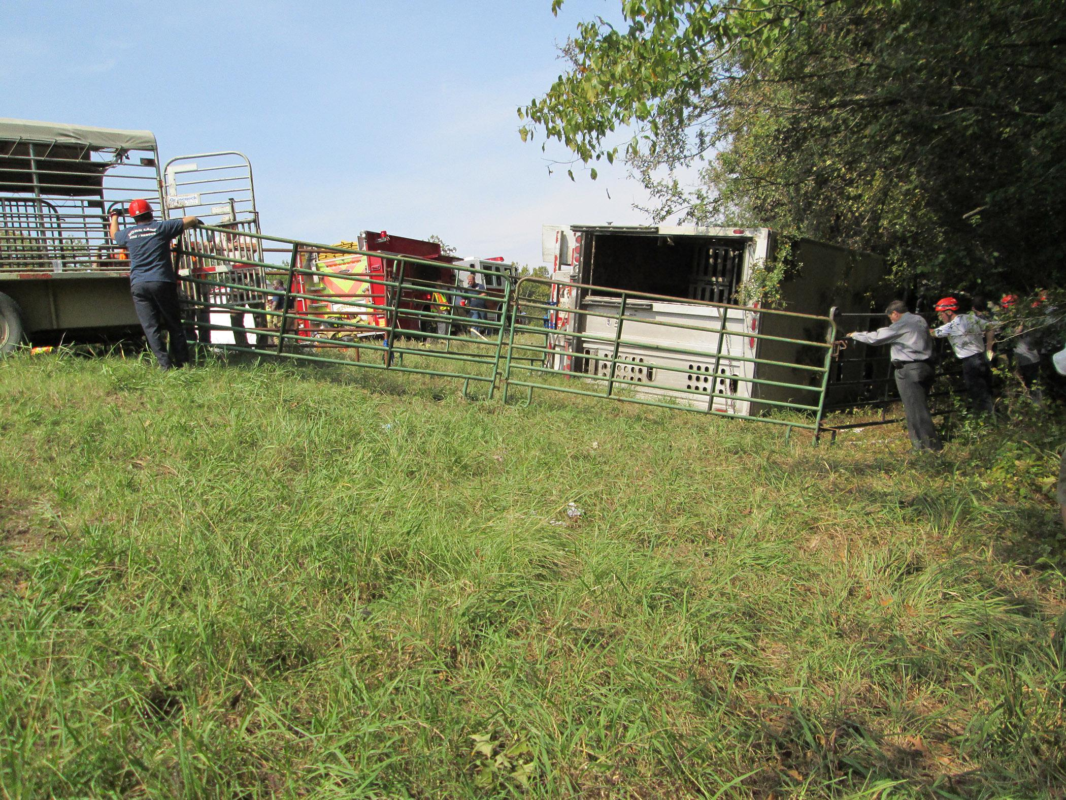 First responders brought in heavy equipment and portable fencing to help remove and contain about 100 cattle from an overturned 18-wheeler in DeSoto County on Highway 78 on Sept. 28, 2012. (Photo by Mississippi Board of Animal Health/Jesse Carter)