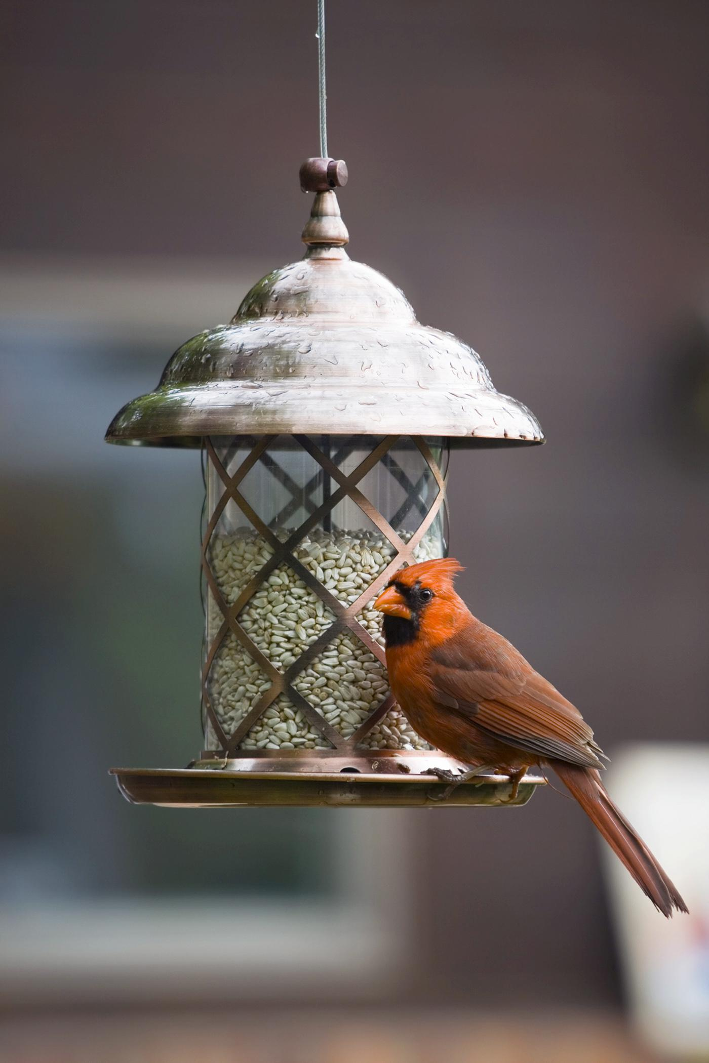 Winter's chill presents a perfect opportunity for bird watching at feeders set up to accommodate feathered guests. (File photo)