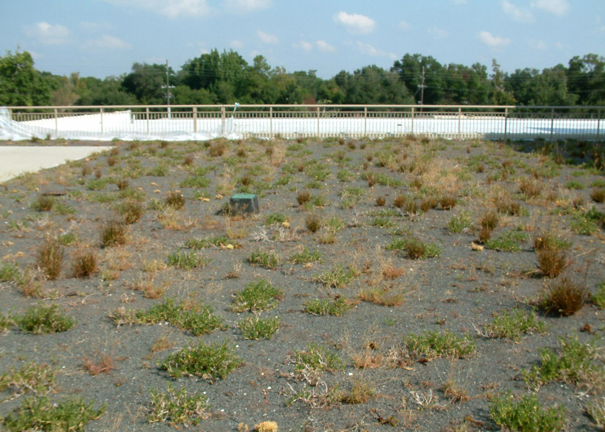 The rooftop gardens at the Gulfport Armed Forces Retirement Home were struggling before horticulture scientists at Mississippi State University planned and implemented a new maintenance plan. (MSU Ag Communications/Submitted photo)