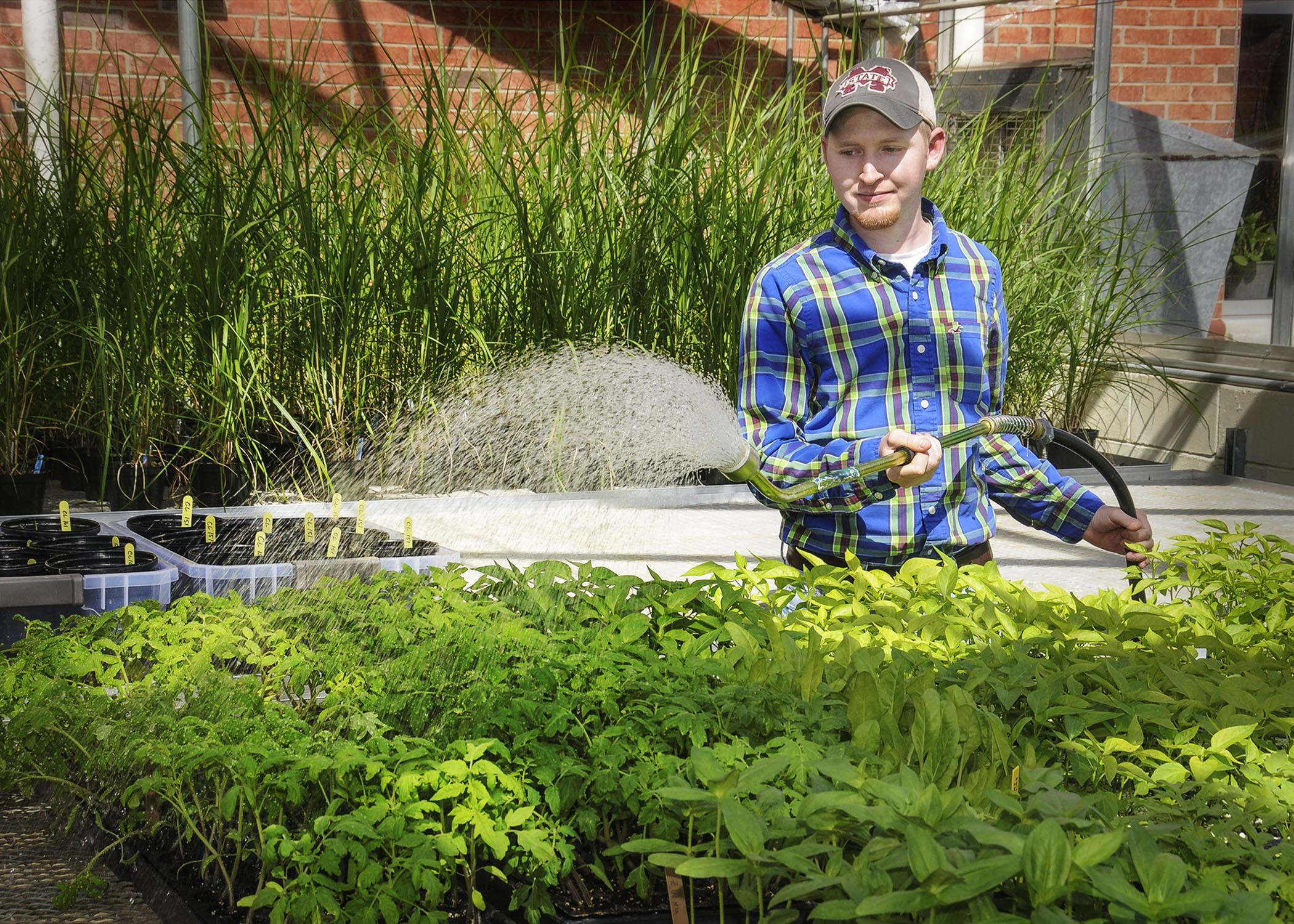Dallas O'Bryant of West Point, a senior at Mississippi State University, waters seedlings in the greenhouses behind Dorman Hall on March 8, 2013. An agribusiness major and owner of Double D Farms, O'Bryant plans to pursue a career growing produce for local consumers. (Photo by MSU Ag Communications/Scott Corey)
