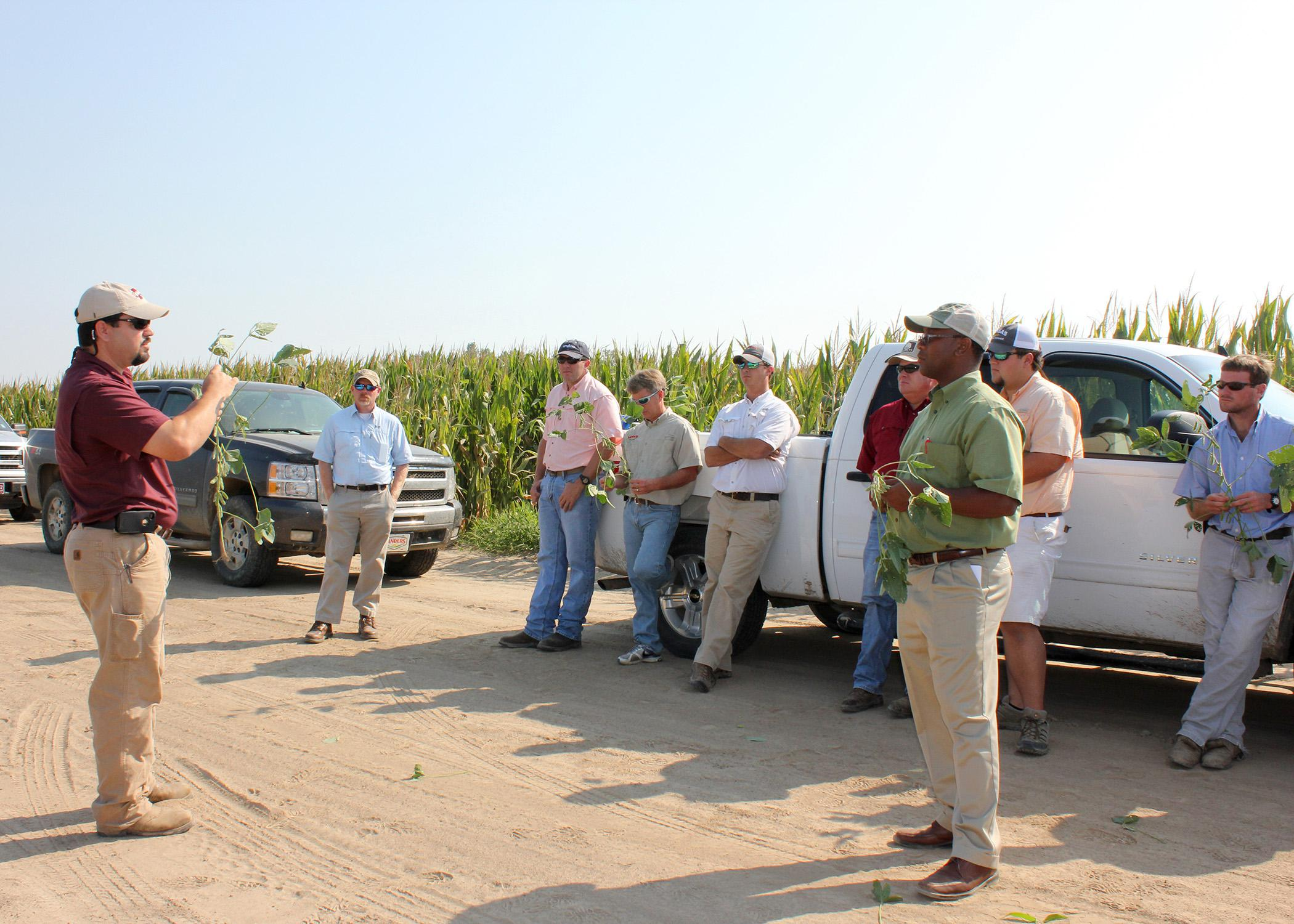 Trent Irby, left, demonstrated how to determine the maturity level of soybeans Aug. 30, 2013, at Mississippi State University's Delta Research and Extension Center in Stoneville. Producers can conserve water and save money on irrigation by correctly timing termination. (Photo by MSU Ag Communications/Bonnie Coblentz)