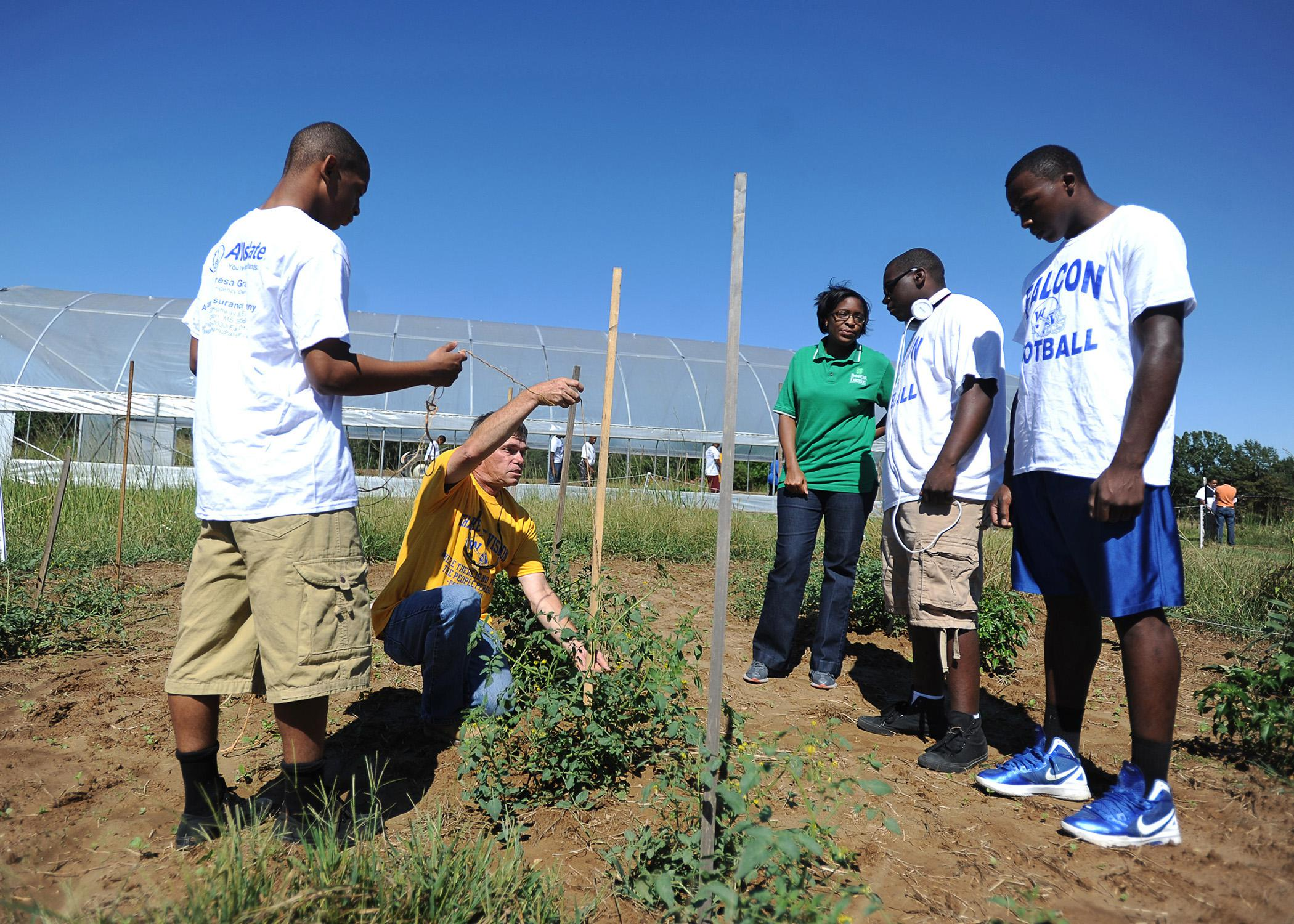 Wingfield High School football team members learn about gardening on Sept. 22, 2013, at Foot Print Farms in Jackson. Eric Hunter Jr., a strong safety, assists Mississippi State University research professor and 4-H volunteer Bill Evans as they string tomato plants. Hinds County 4-H agent Rocheryl Ware discusses the club project with Dwight Henry, a defensive tackle, while Antonio Wilks Jr., defensive end, observes. (Photo by Clarion-Ledger/Joe Ellis)
