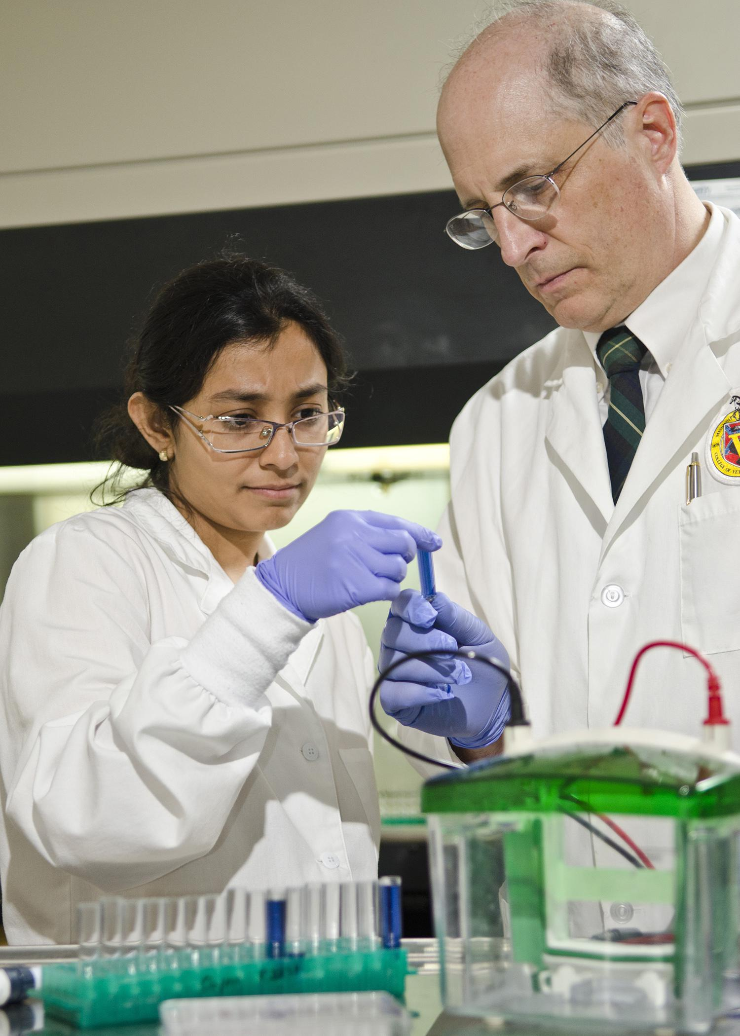 At the Mississippi State University College of Veterinary Medicine, Lakshmi Narayana, a postdoctoral associate, and Dr. Cody Coyne, a professor of molecular pharmacology and immunology, research cancer therapies that target specific cells. (Photo by MSU College of Veterinary Medicine/Tom Thompson)