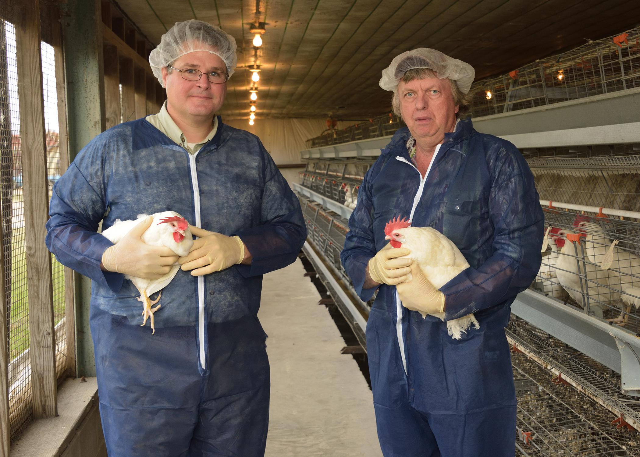 Mississippi State University Extension Service poultry specialists Morgan Farnell (left) and Tom Tabler are working with representatives from the Mississippi Department of Health to improve conditions at the Mississippi Department of Corrections poultry facility in Parchman, Mississippi. (MSU Ag Communication 2014 file photo)