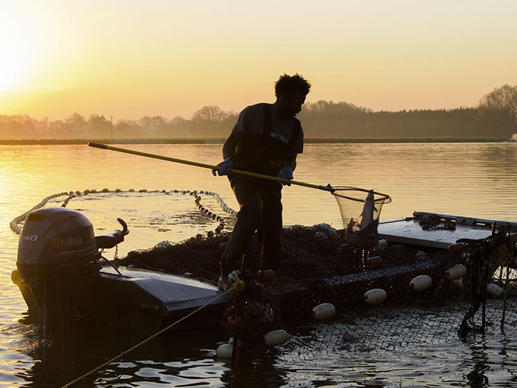 In the summer, catfish harvest begins early in the morning to beat the heat. Magic Turner of Brooksville uses a boat to pull the seine net through the water to bring the fish closer to shore and the next step in the harvest process.