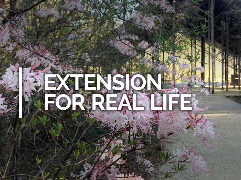 Extension for Life header.