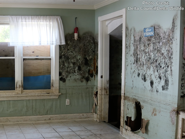 Two walls of a kitchen that has been flooded show significant mold damage and damage to the drywall.