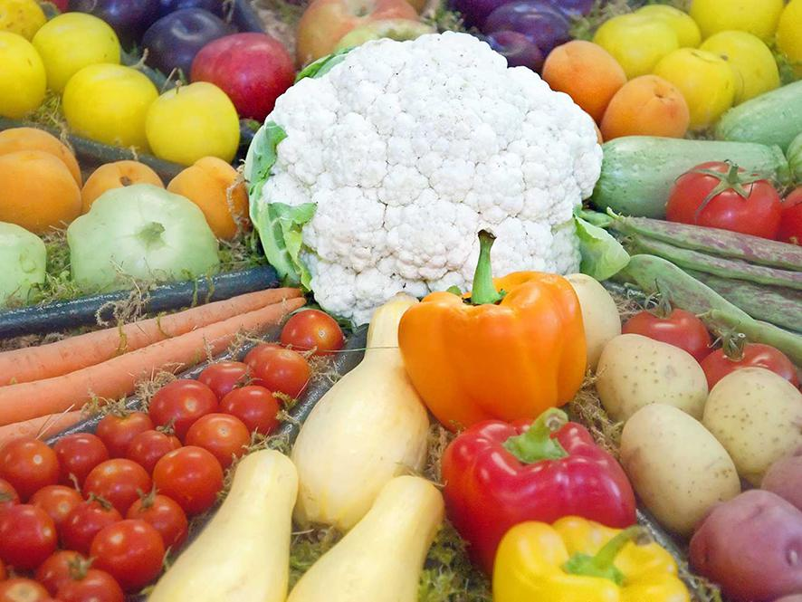 A colorful display of fruits and vegetables features a head of white cauliflower in the center with tomatoes, bell peppers, yellow squash, potatoes, plums and more radiating outward.
