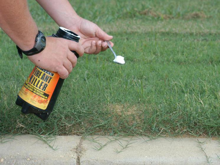A person holds a canister of dry powder pesticide and a measuring spoon of powder over a fire ant mound.