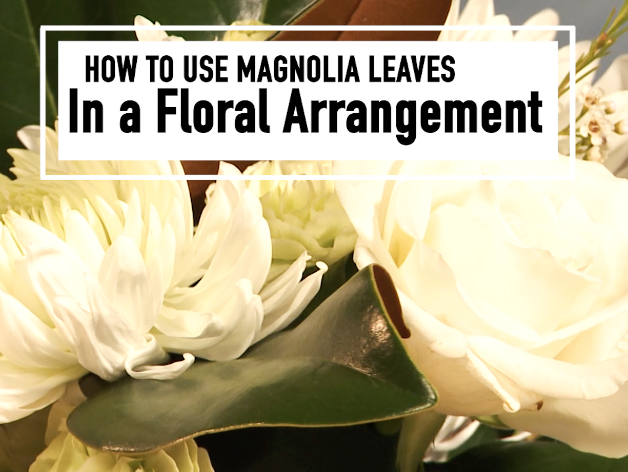 Magnolia leaves star in a small floral arrangement with white flowers.
