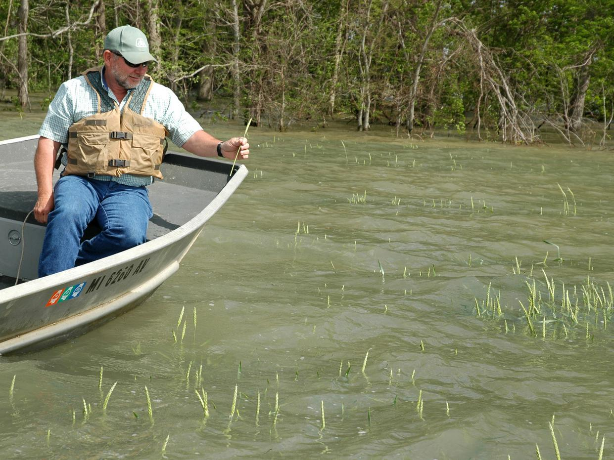 Doug Jeter needs a boat to visit his 150 acres of wheat near the Yazoo River. He holds a wheat head that grew on one of the higher spots in his flooded wheat field in Warren County.  (Photo by Linda Breazeale)