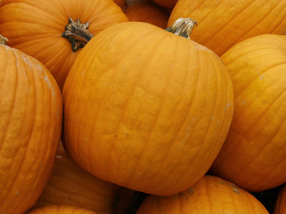 These pumpkins found at J&A Farms and Nursery in Flora are among the few Mississippi pumpkins to have been harvested early or to have survived the heavy September and October rains. (Photo by Kat Lawrence)