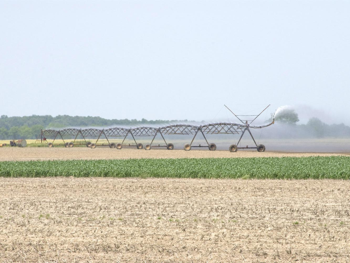 Recent high temperatures and a lack of rain have been harder on crops without irrigation than those with it. Many Mississippi farms are watered through pivot irrigation systems. (Photo by MSU Ag Communications/Marco Nicovich)