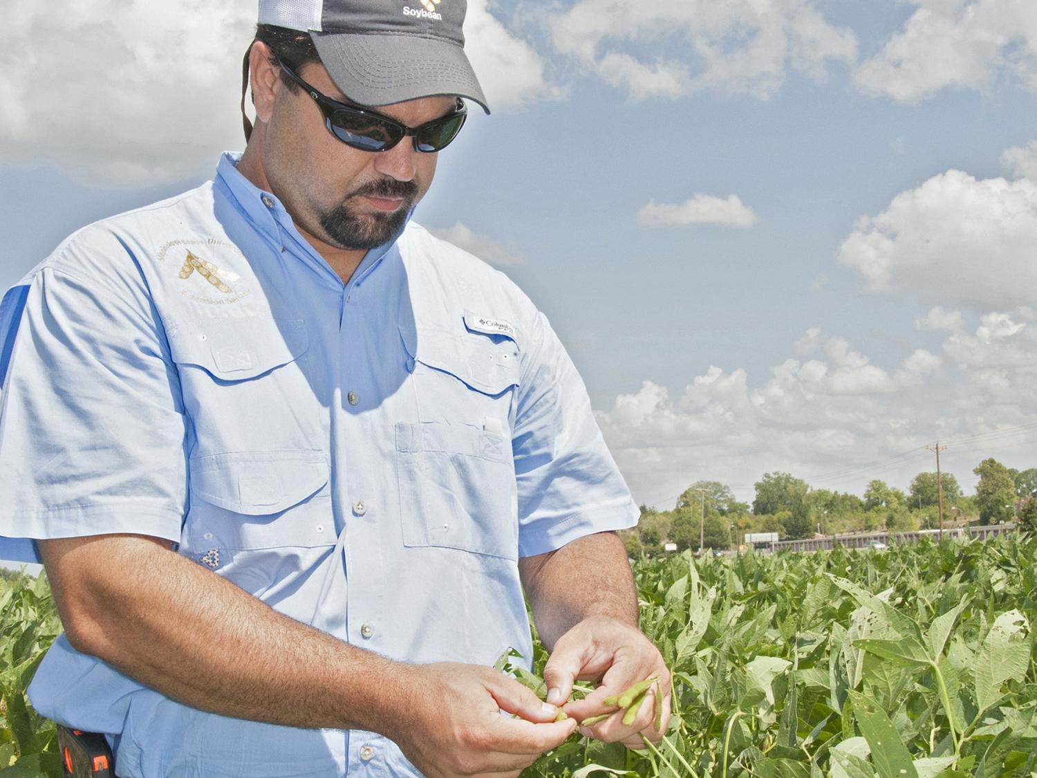 Trent Irby, Mississippi State University Extension Service soybean specialist, checks the maturity stage of soybeans planted at the R.R. Foil Research Center on the MSU campus Aug. 21, 2014. Mississippi soybean growers are expected to harvest a record yield this year. (Photo by MSU Ag Communications/Kat Lawrence)