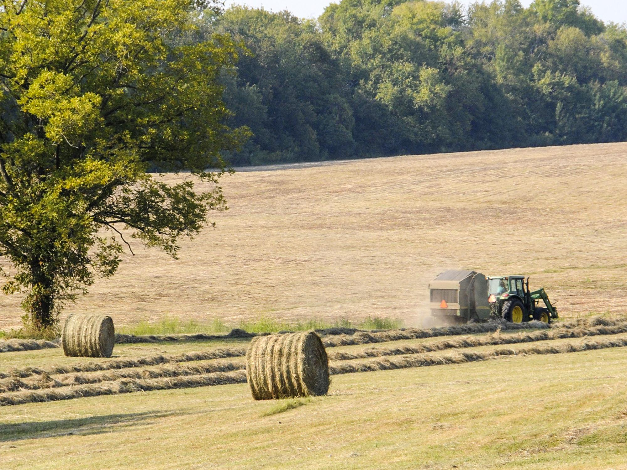 Mississippi hay supplies are expected to be low going into winter. Factors that contributed to low production include a very cold winter, a wet spring and an abundance of armyworms. (Photo by MSU Ag Communications/Scott Corey)
