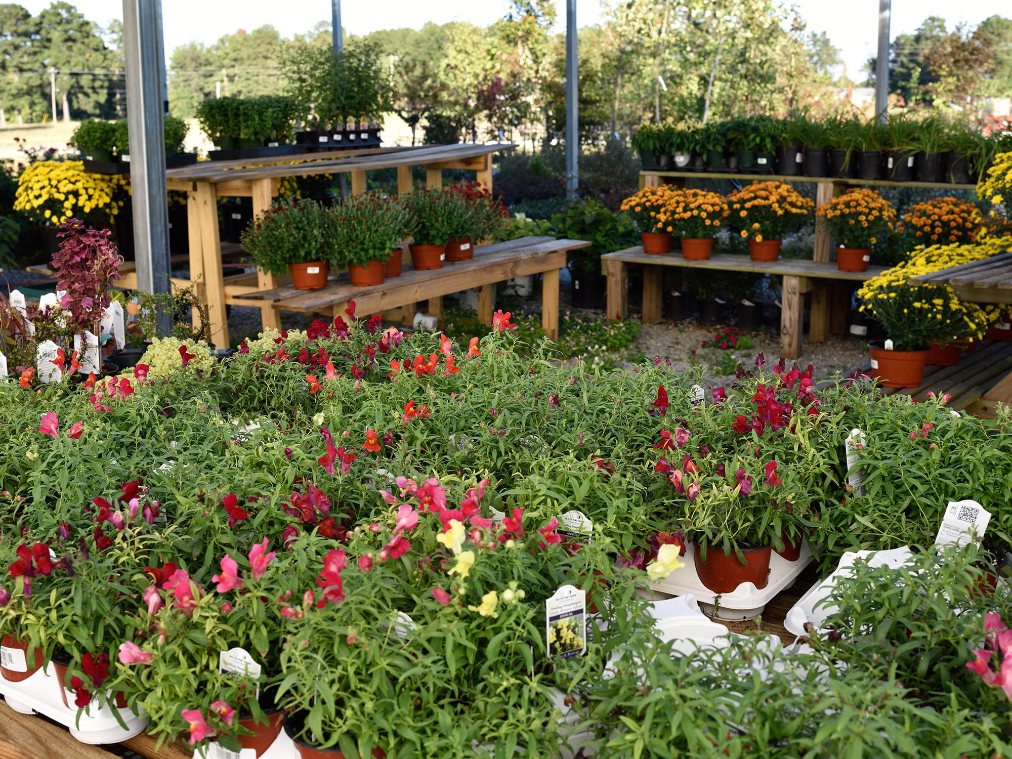 Shrubs, trees, bedding plants and seasonal mums are displayed at Evergreen Garden Center in Louisville on Sept. 24, 2014. Gardeners bought more landscaping products in 2014 than in recent years. (Photo by MSU Ag Communications/Kevin Hudson)