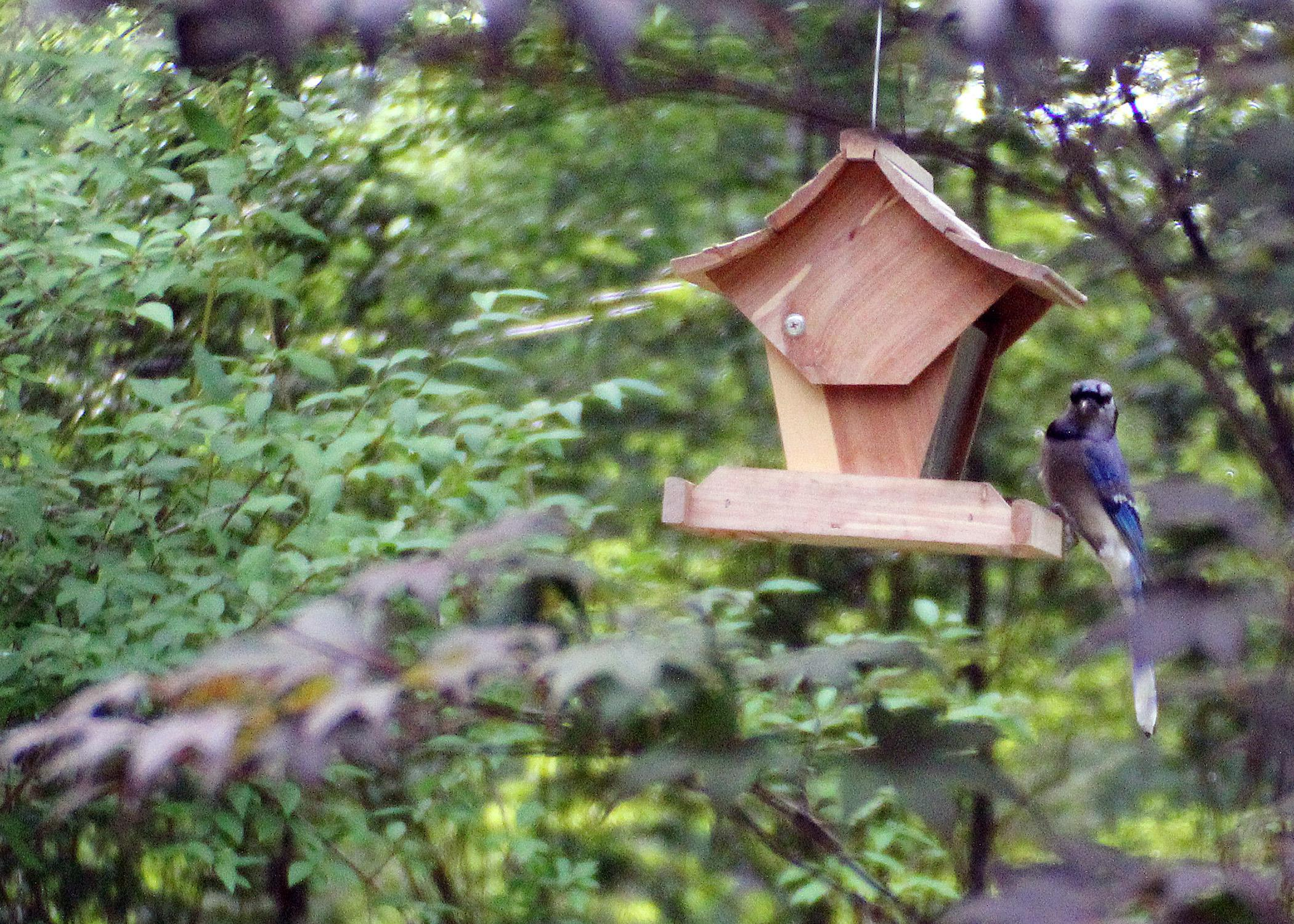 Consistently providing nutritious seeds and nuts to songbirds in the wintertime can offer humans a closer view of these wild animals. (Photo by Marina Denny)