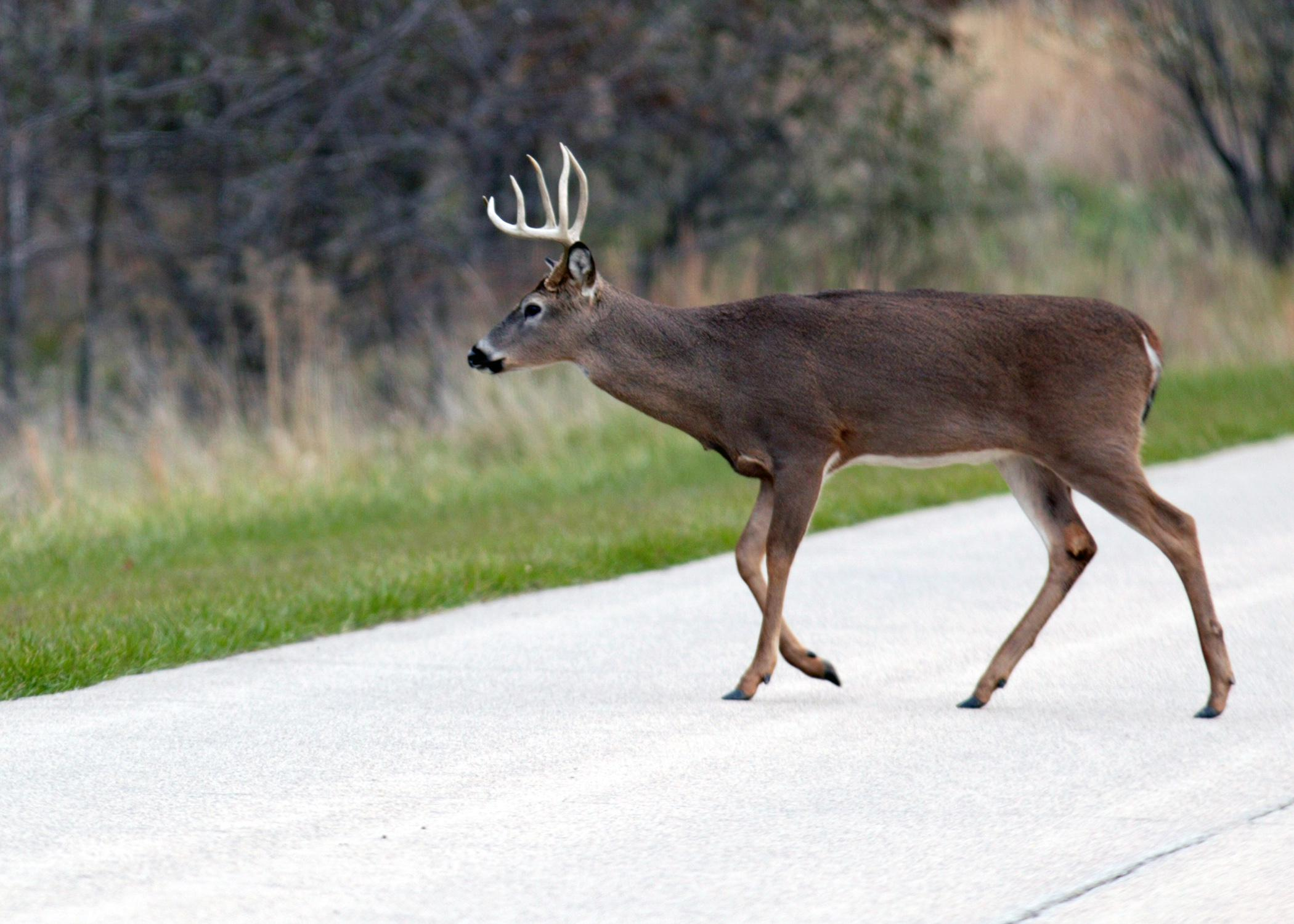 Wildlife-vehicle collisions often occur at dawn and dusk, when wildlife are most active. (Submitted photo)