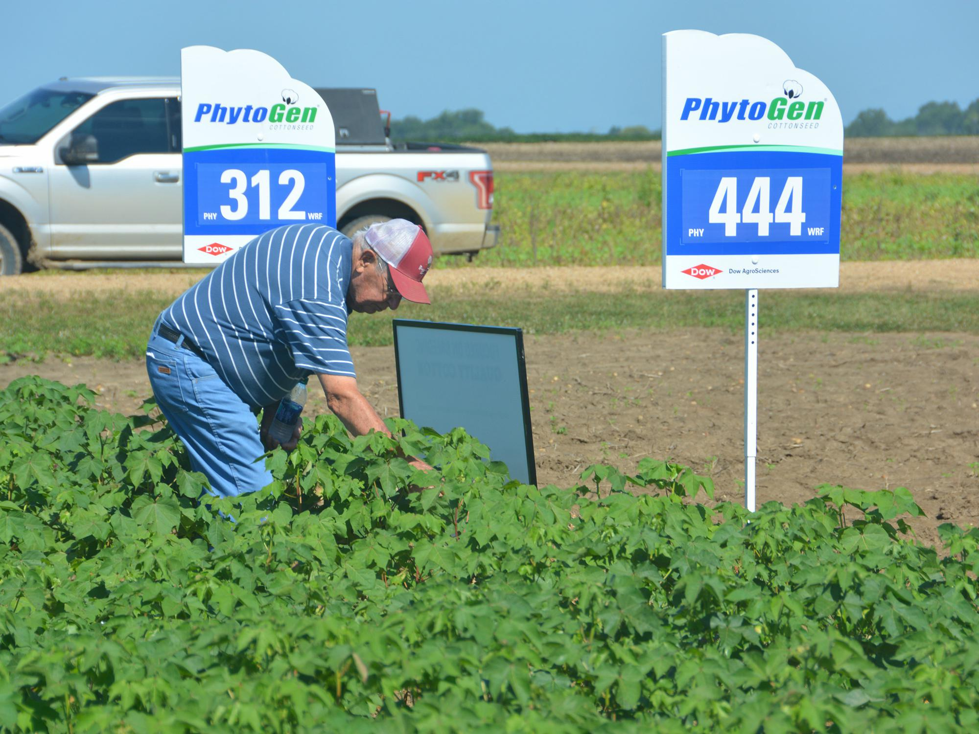 Award-winning farmer Paul Good examines cotton growing in Noxubee County during a Mississippi State University field tour on July 12, 2017. Good said he remembers a time when farmers did not grow cotton in the area, mostly because of boll weevils. (Photo by MSU Extension Service/Linda Breazeale)