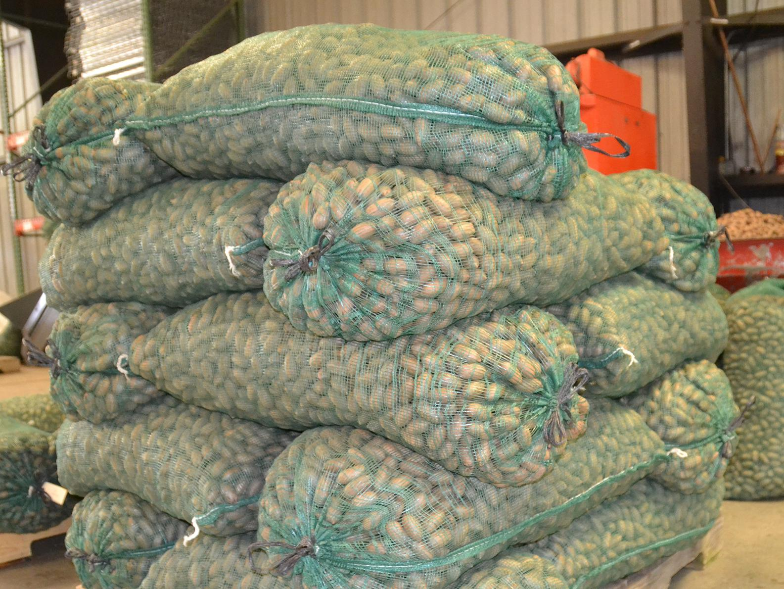 About a dozen large, 50-pound bags of unshelled pecans are piled on top of a wood palet.