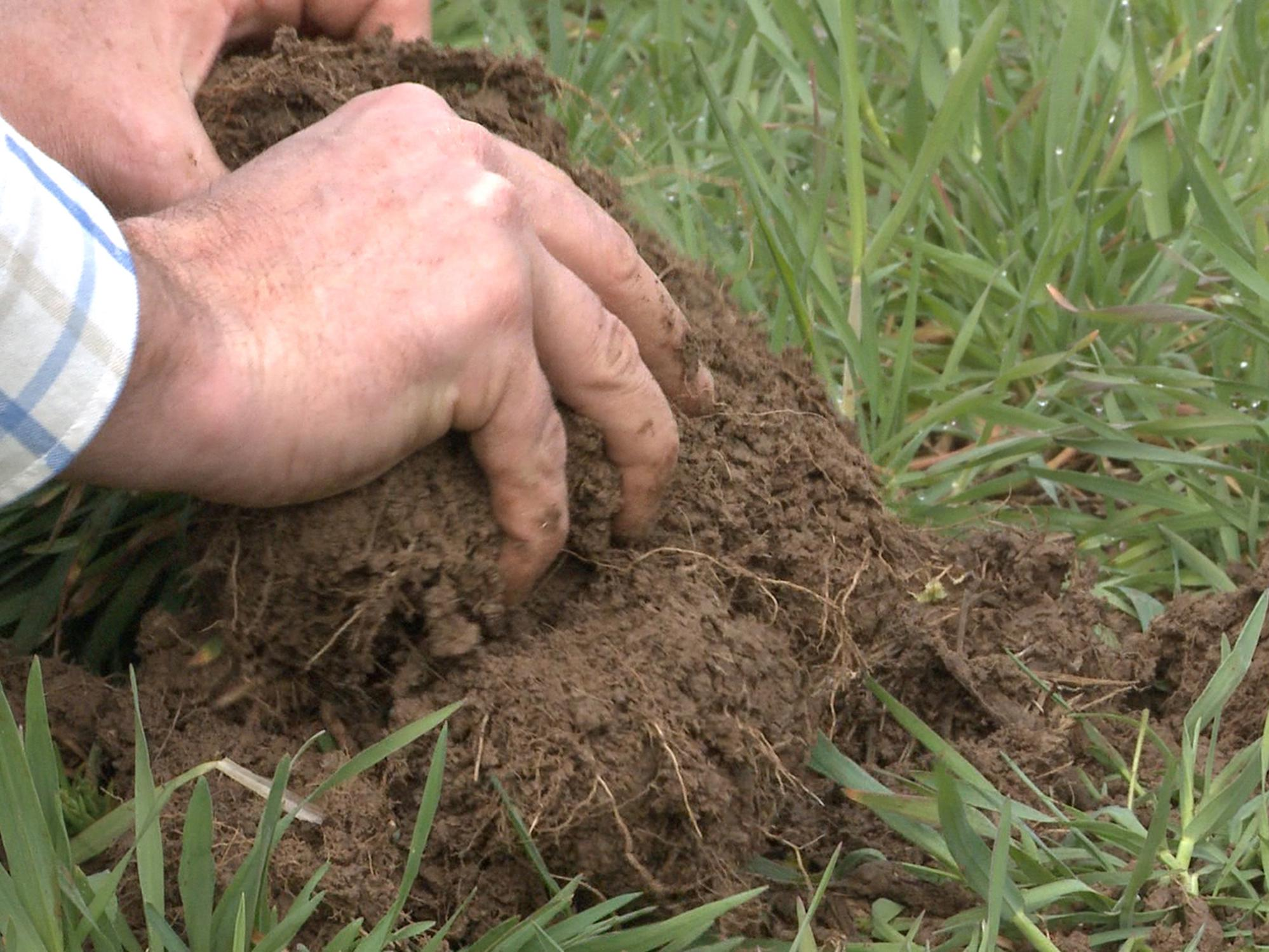 A pair of hands pull rich soil from the ground with green grass around it.