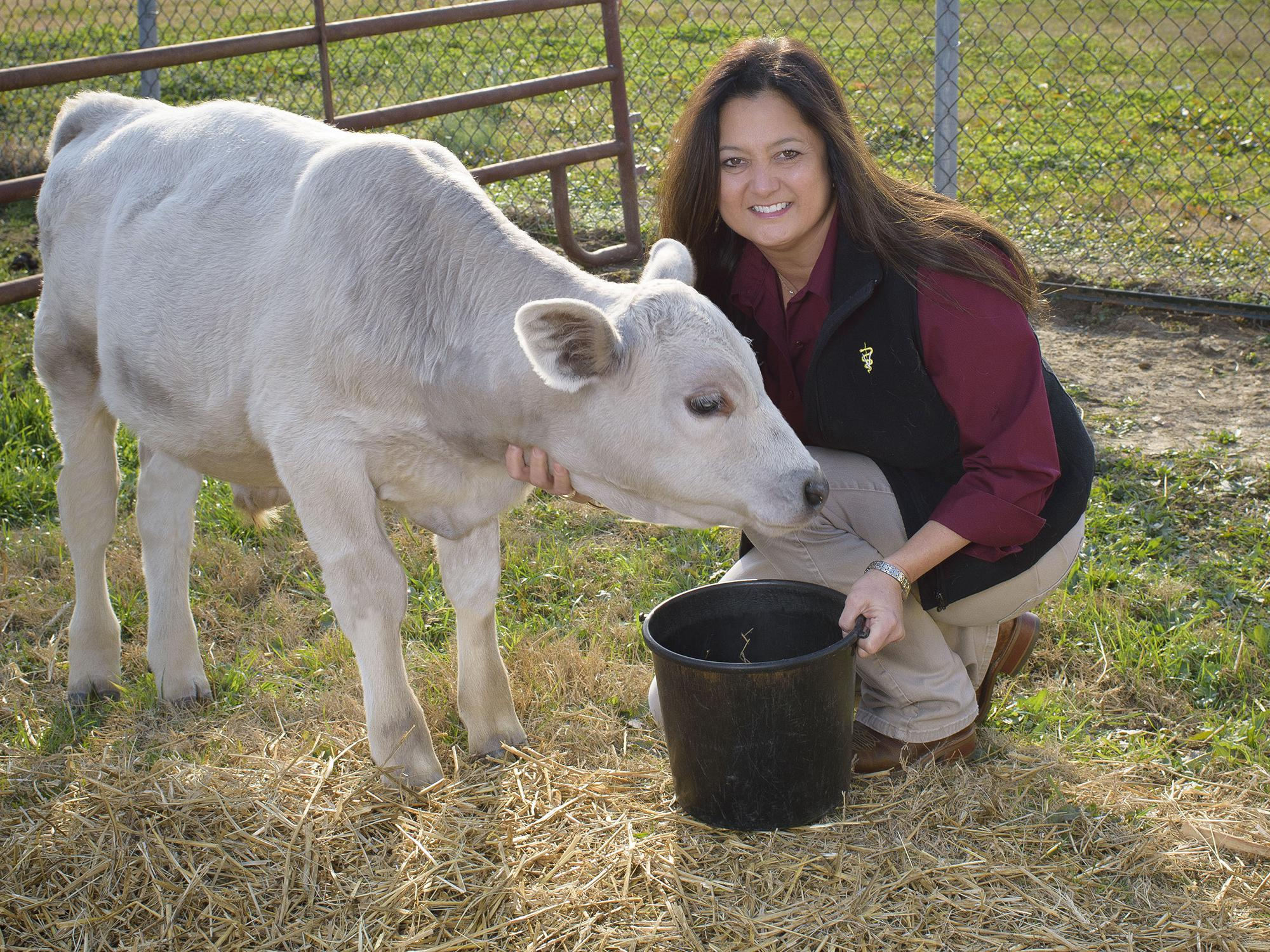 Woman inside a gate in a pasture feeding a white cow.