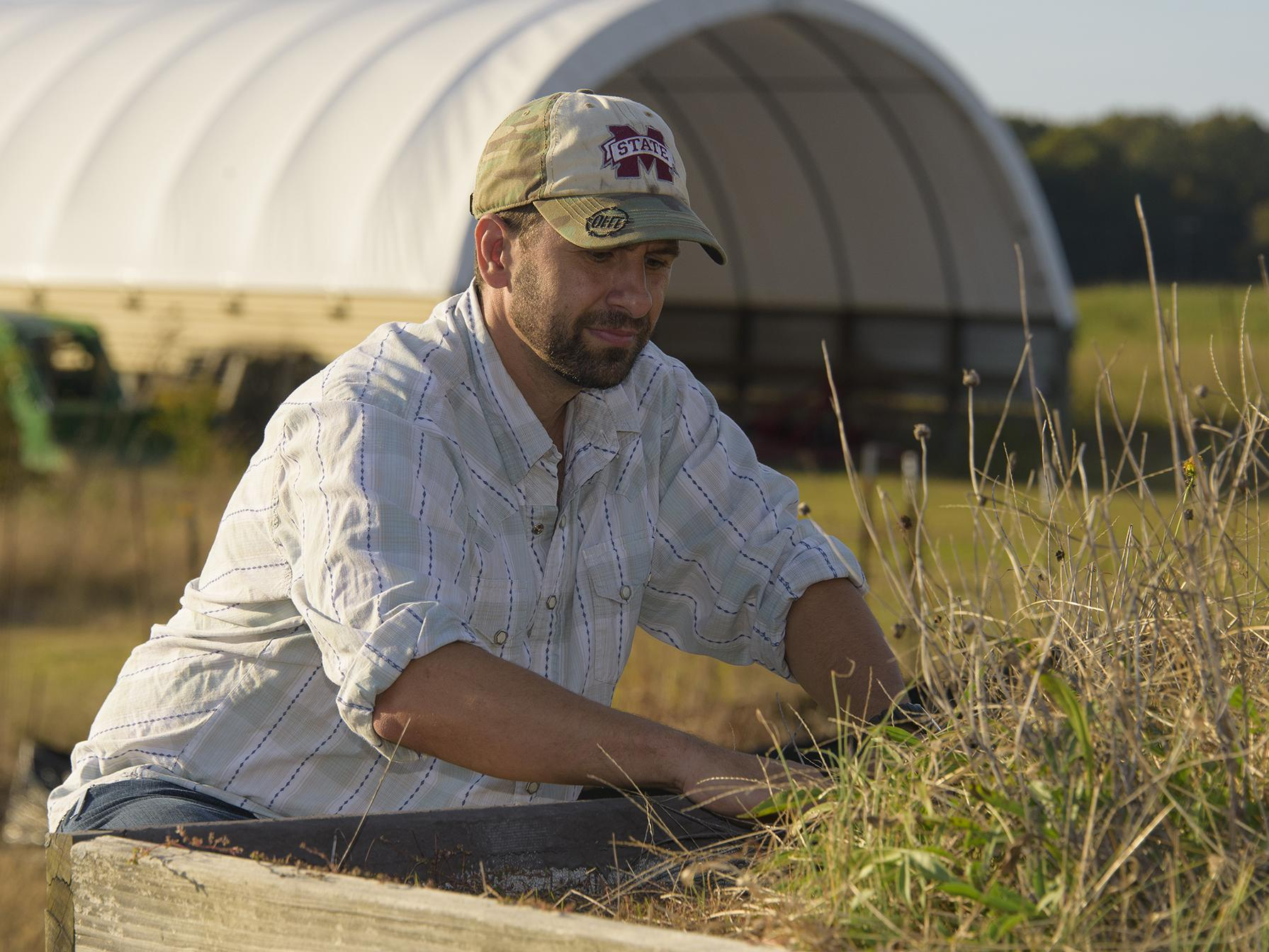 A man in a baseball cap reaches into a patch of grass, while a tractor and a white, high-tunnel structure stand behind him.