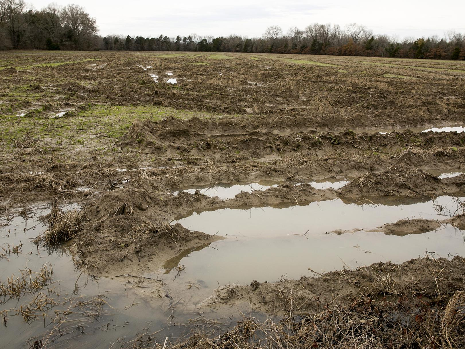 Harvested field with large tire ruts holding water.