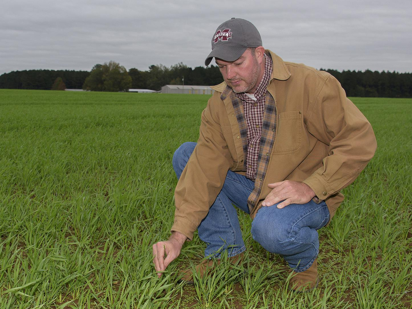 A man in a jacket and baseball cap kneels down to touch small, grass-like plants that cover a field.