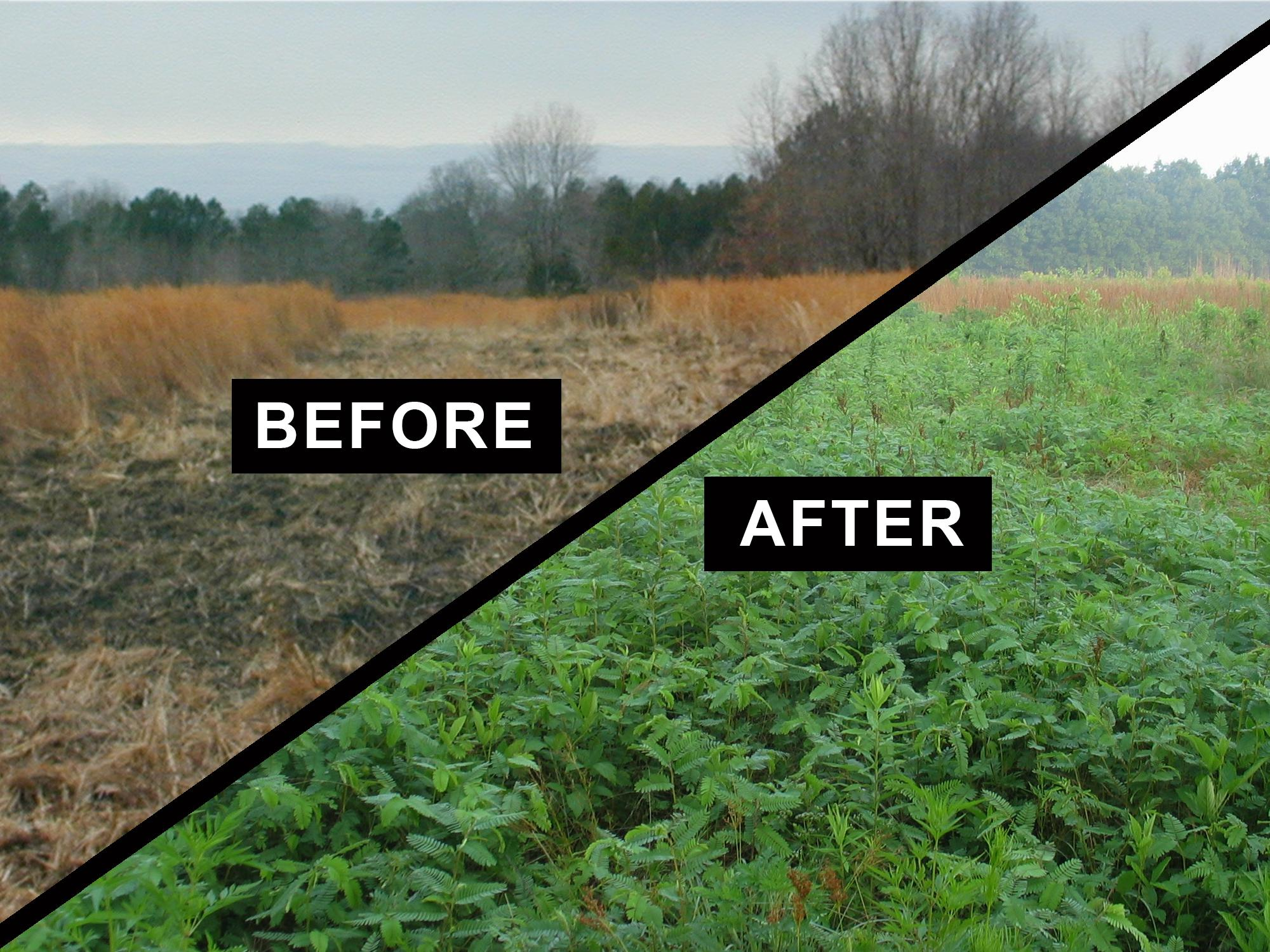 The first photo shows ground that has been disked in the middle of dormant grasses. The second photo shows the same location with green plants growing beside grasses that are not as lush.