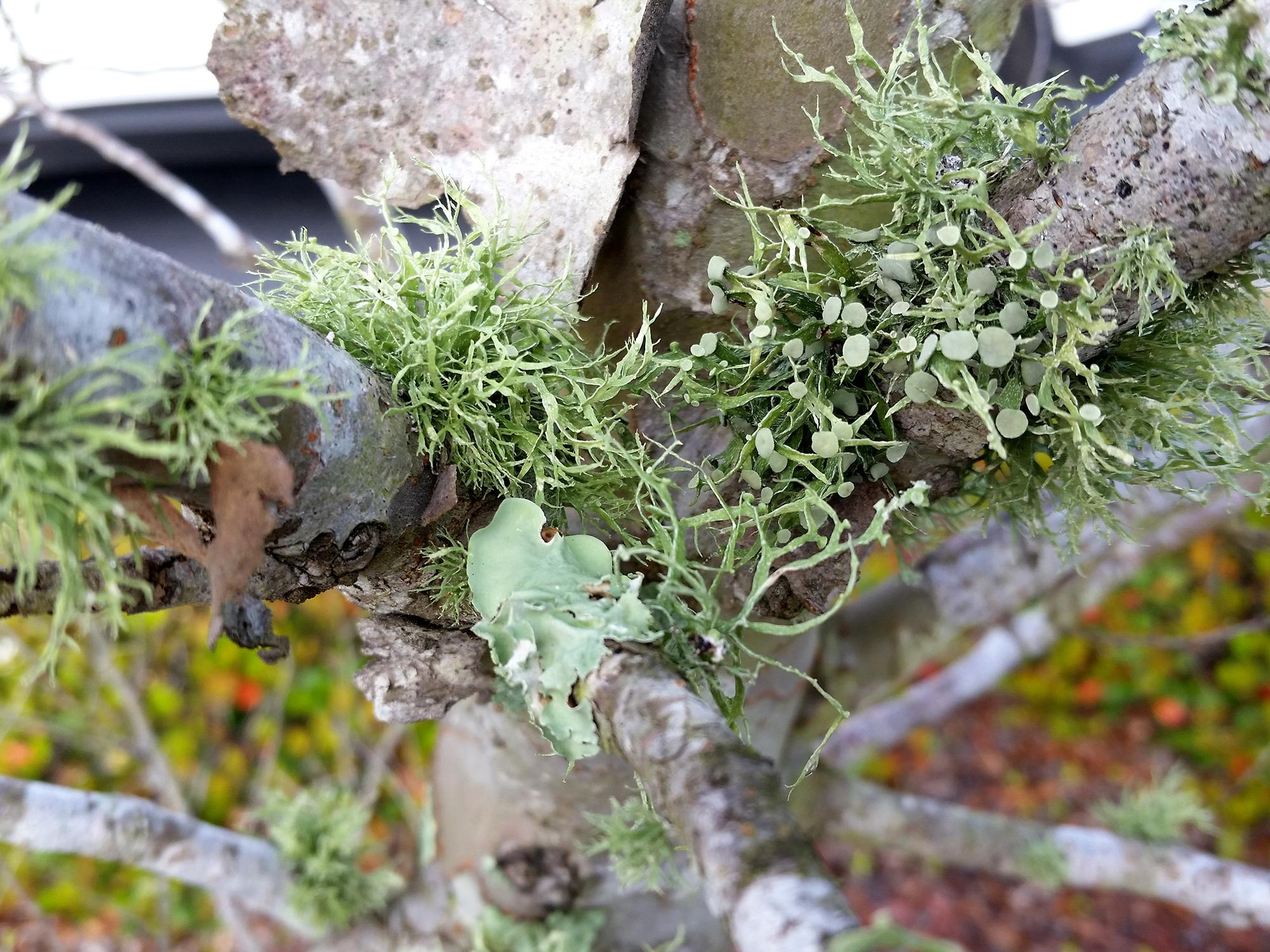 A small tree with leafy green growth on the bark