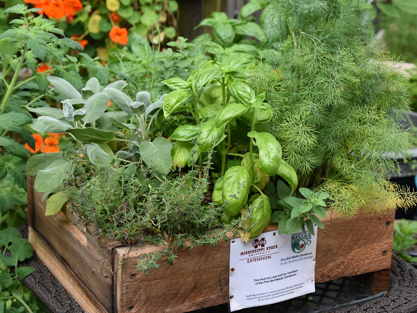 A rough-hewn, low-sided wooden box filled with four different kinds of green plants rests on a small table in front of a variety of other plants in plastic containers.