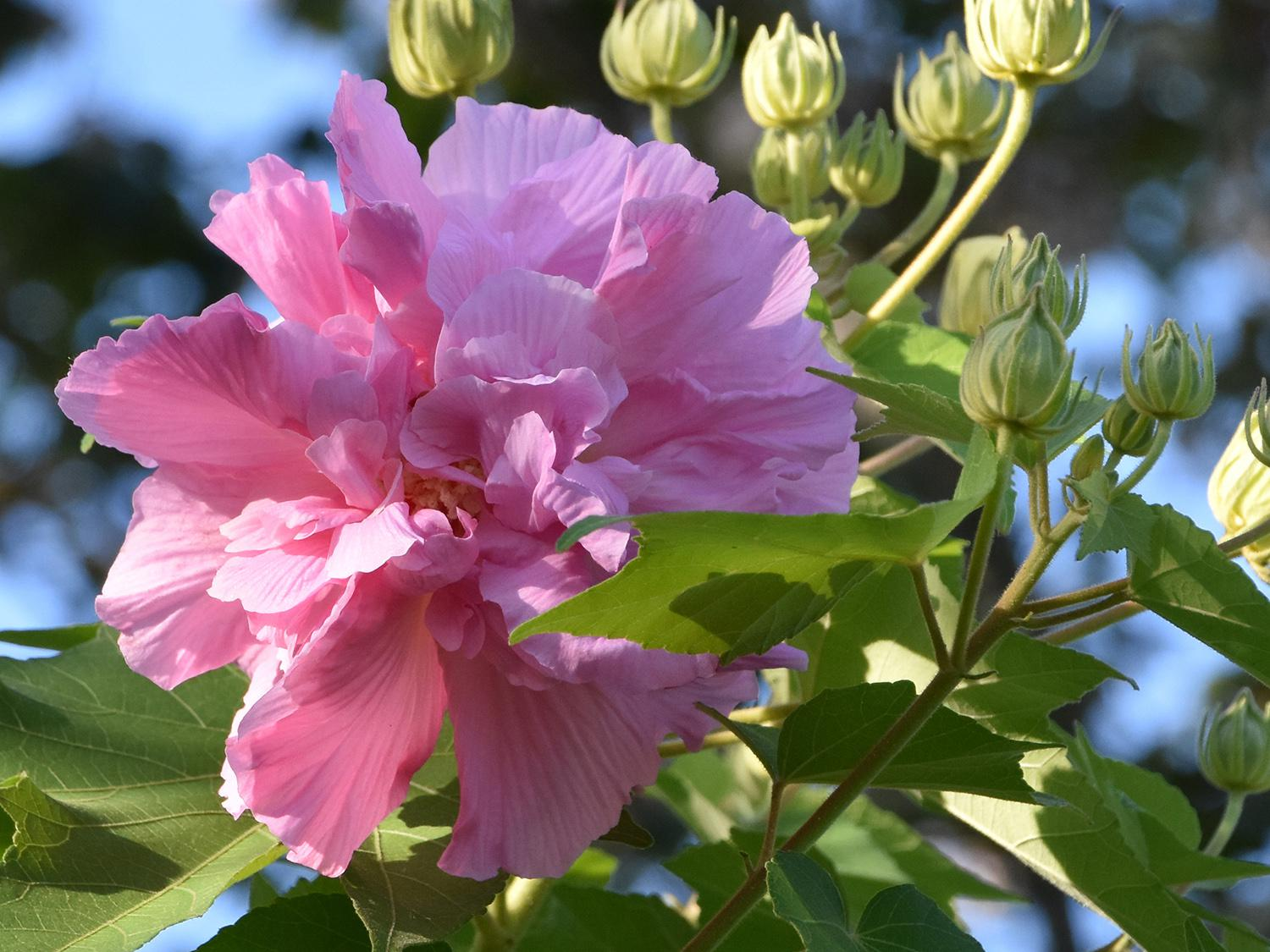 A single, pink flower rests at the end of a branch seen against a leaf-filled blue sky.