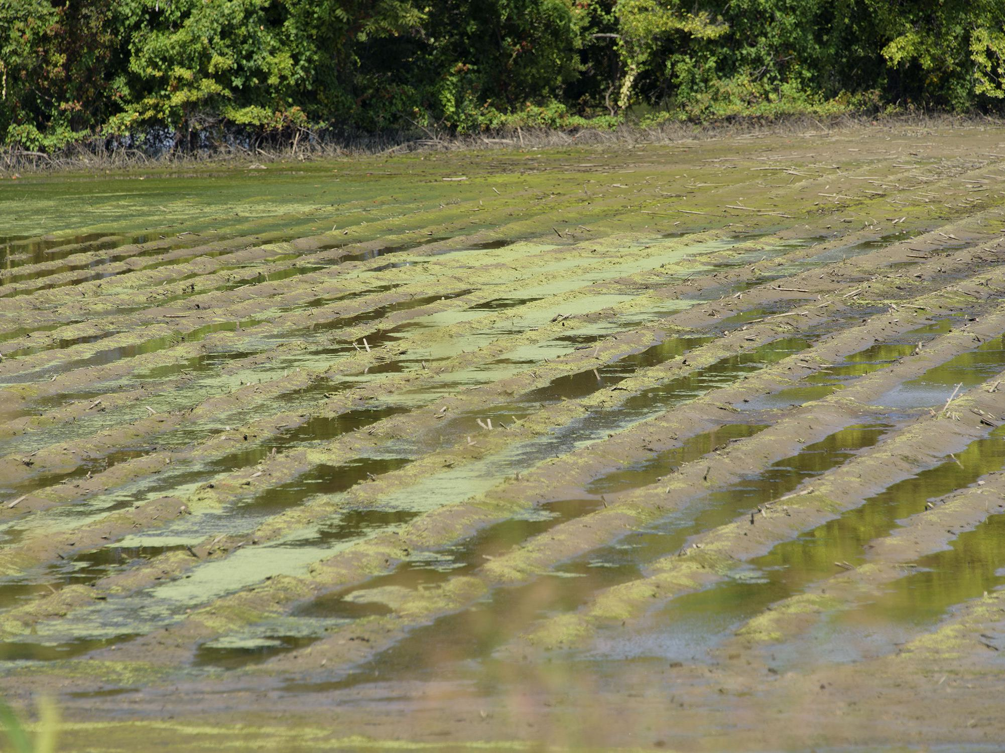 A muddy field with standing water in its furrows.