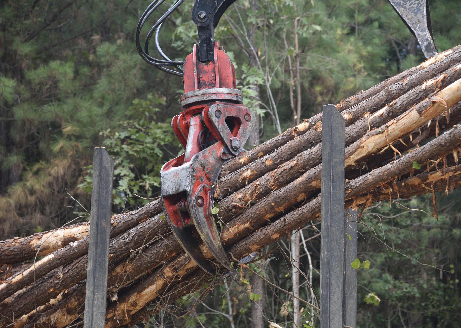 Logging tongs bundle timber.