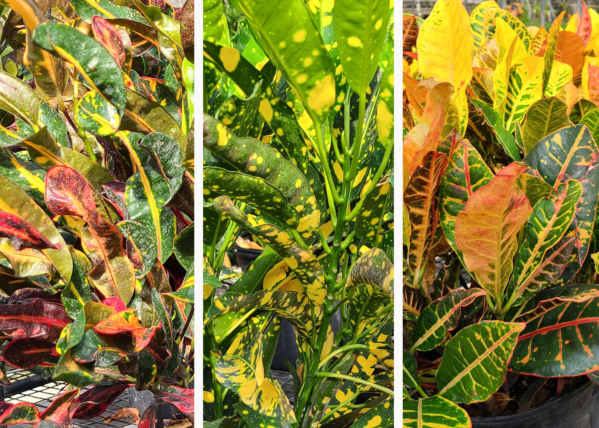 Three panels display colorful green, yellow and purple foliage.