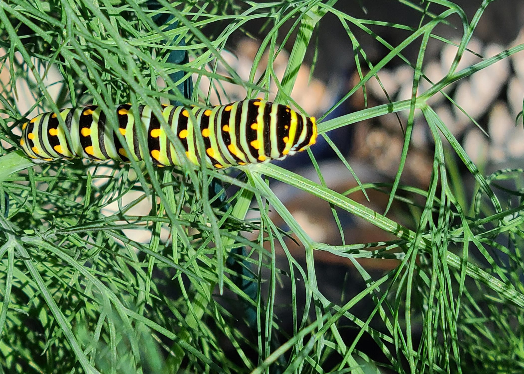 A large, striped butterfly rests on a green plant.