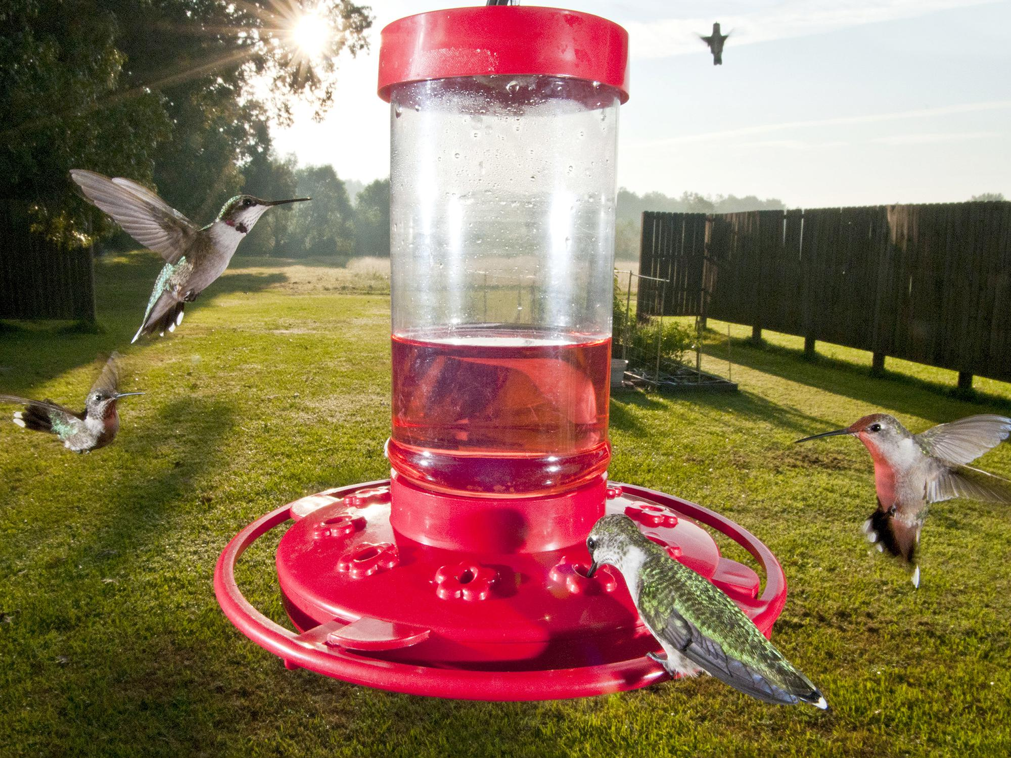 Hummingbird feeders attract tiny migrating visitors to Mississippi yards, but anyone who is not willing to keep fresh feed in a frequently cleaned container should consider planting a hummingbird garden instead. (MSU Extension Service file photo)