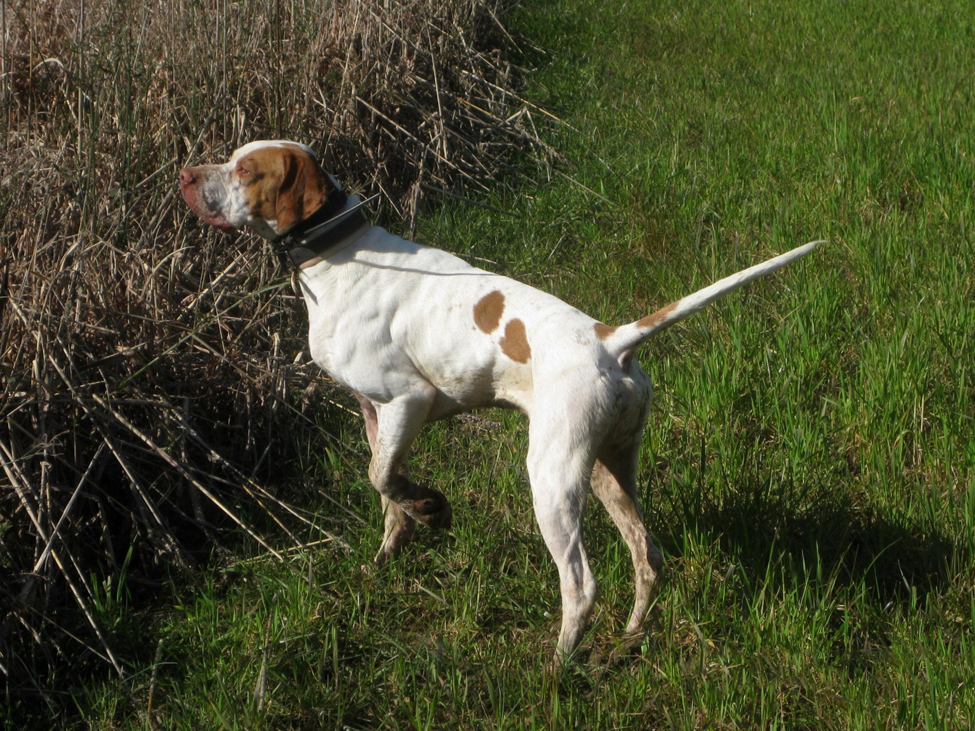 Landowners should consider several factors when preparing hunting leases for their land, including what wildlife species individuals may hunt on the land -- from bobwhite quail to white-tailed deer. (Photo by MSU Extension Service/Daryl Jones)