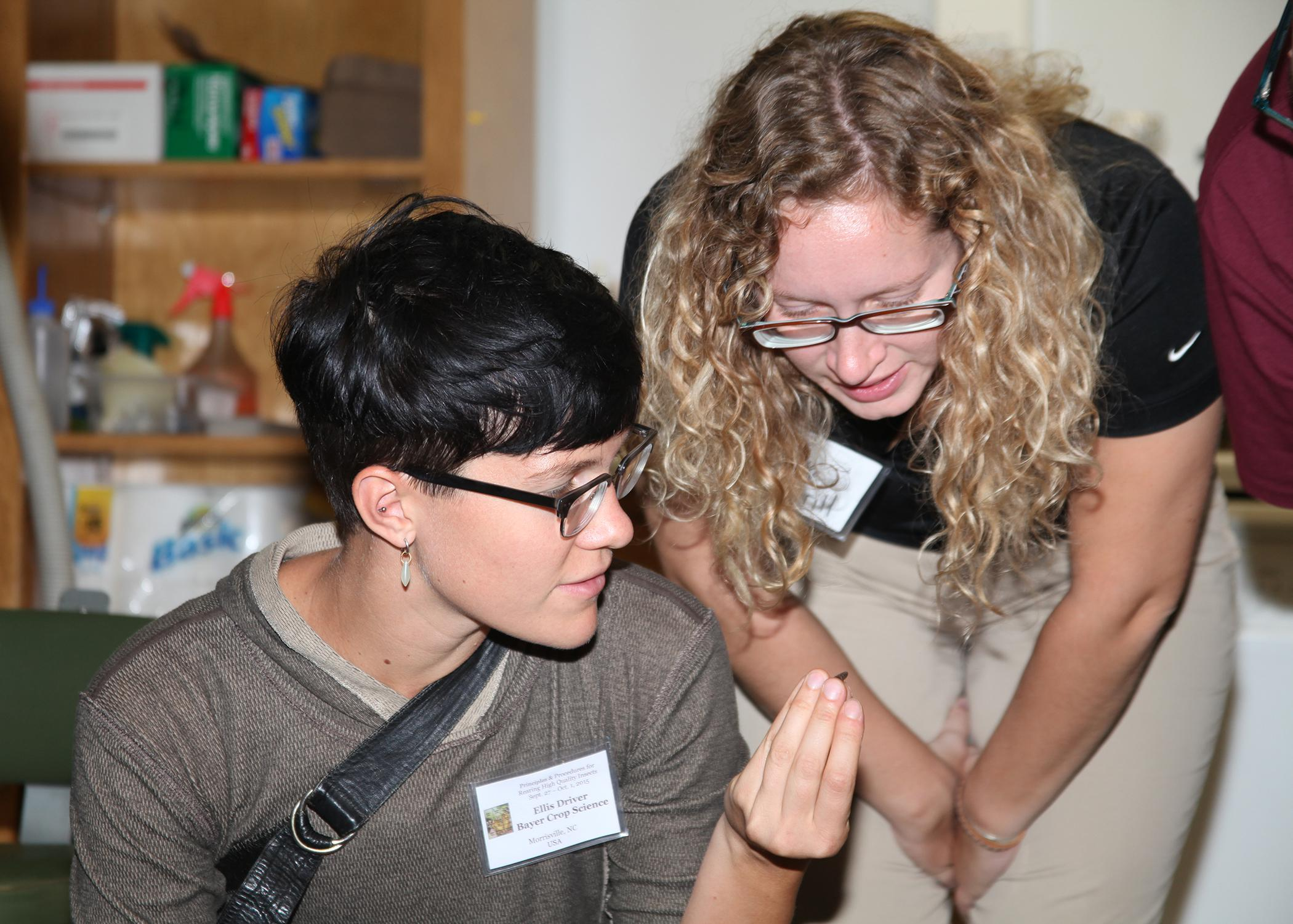 Each fall, scientists from all over the world come to Mississippi State University to learn the latest insect-rearing techniques. Ellis Driver from Bayer Crop Science in Morrisville, North Carolina and Brook Merrill of Koppert Biocontrol in Howell, Michigan examine a black soldier fly larva in an MSU lab on Sept. 30, 2015 at the 18th annual International Insect Rearing Workshop. (Photo by MSU Ag Communications/Kat Lawrence)