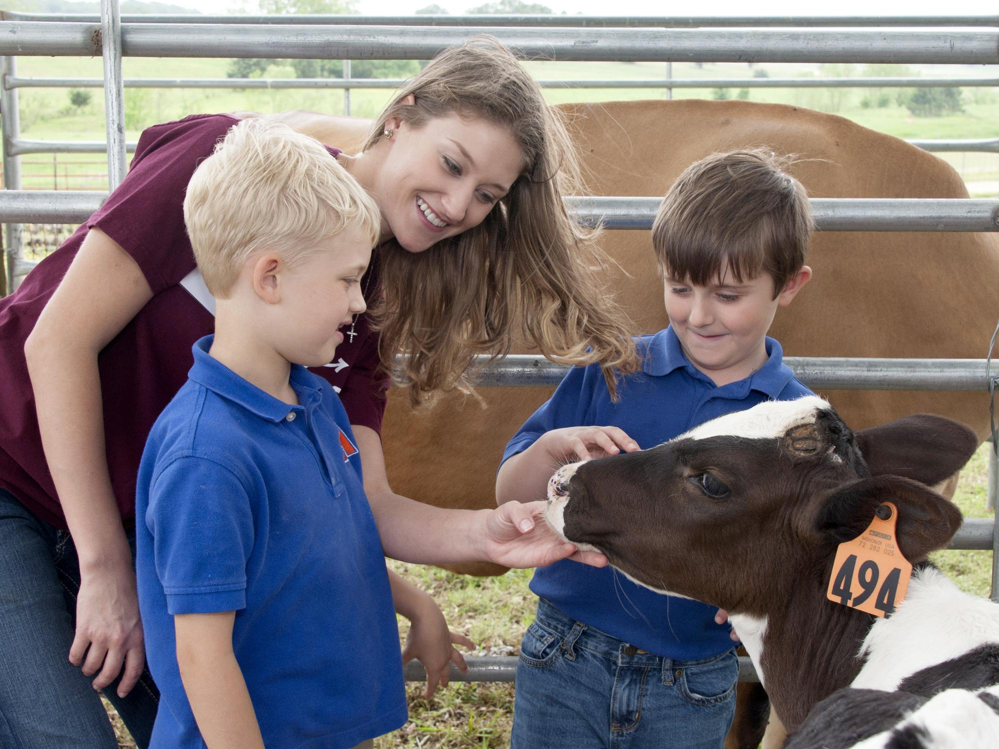 """Carley Wigley, a senior at Mississippi State University from Petal, Mississippi, introduces Luke Iglay and Sam Eifling to a calf during """"Afternoon on the Farm,"""" on April 29, 2016. The outreach program is part of the MSU Department of Animal and Dairy Science capstone course and teaches visiting students the fundamentals of livestock agriculture. (Photo by MSU Extension Service/Kat Lawrence)"""