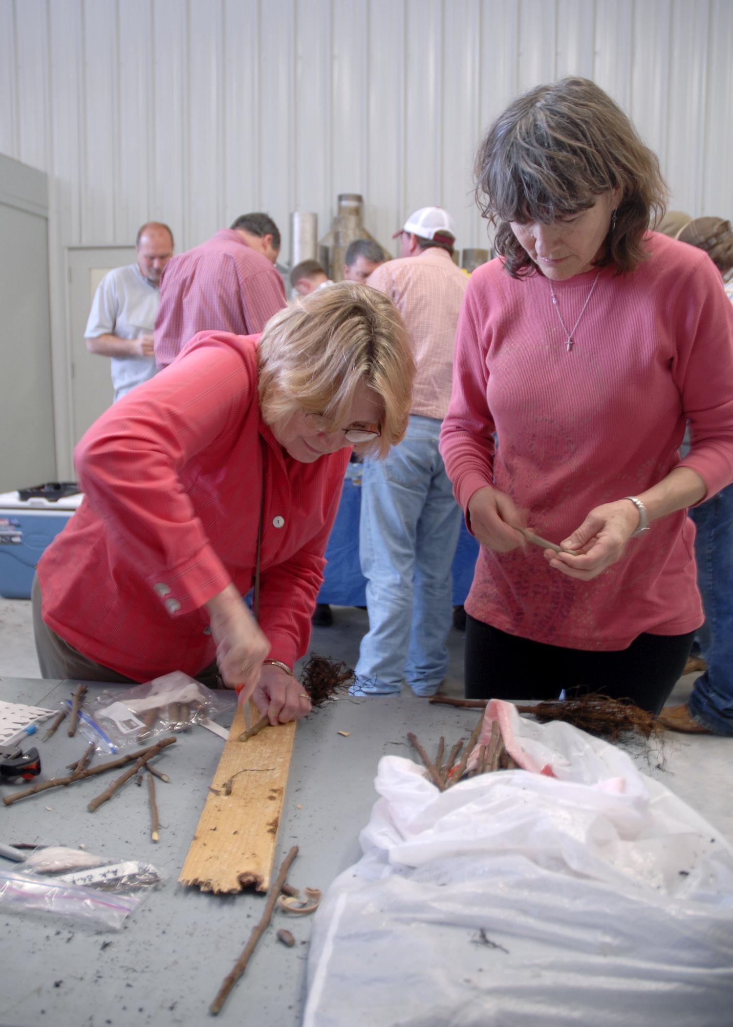 Starkville resident Kathy Elmore, left, cuts a hole into a rootstock during a fruit-grafting workshop on March 26, 2015, at the Northeast Mississippi Research and Extension Center in Verona as Donna Miller of Starkville looks on. (Photo by MSU Ag Communications/Nathan Gregory)
