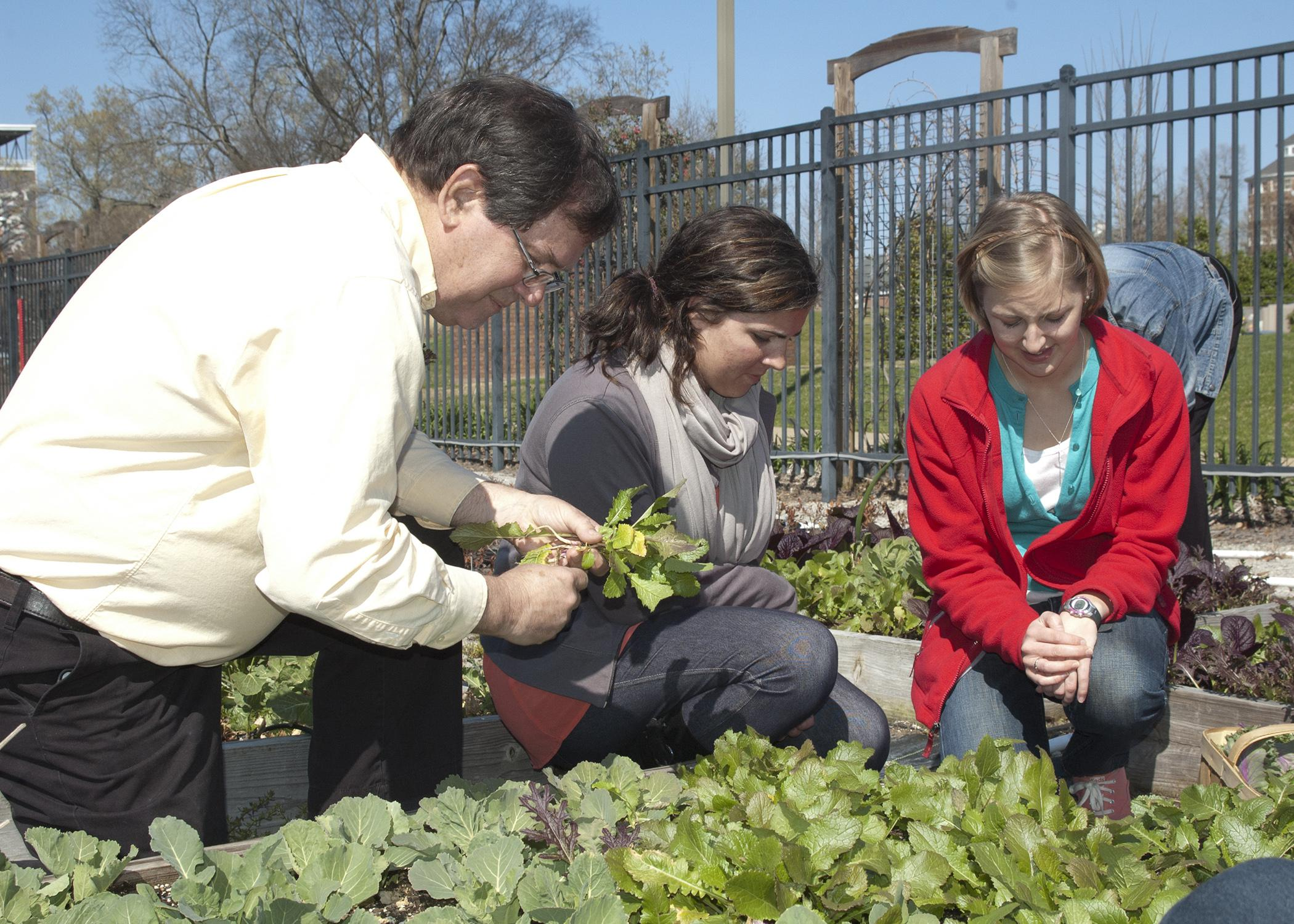 Mississippi State University professor David Nagel, left, oversees vegetable production students Bailey Martin and Anna Laurin Harrison as they harvest a fall crop in planters that grow edible landscapes outside a campus building. (File photo by MSU College of Forest Resources/Karen Brasher)