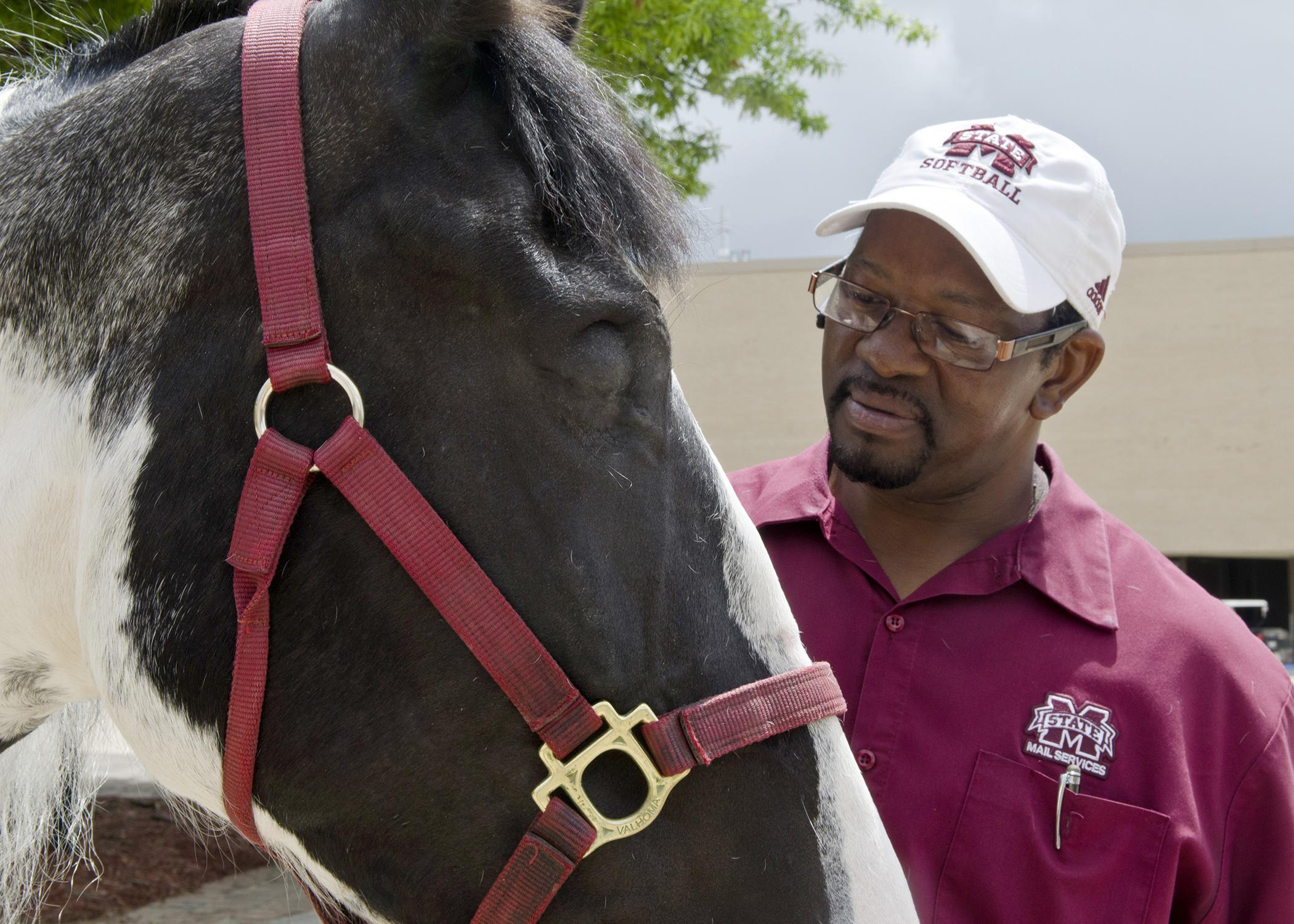 Tender, a horse owned by Henry Wilson of Columbus, is one of the first patients to benefit from a new operating procedure developed by veterinary professors at the Mississippi State University College of Veterinary Medicine. The method minimizes surgical stress and complications. (Photo by MSU College of Veterinary Medicine/Tom Thompson)